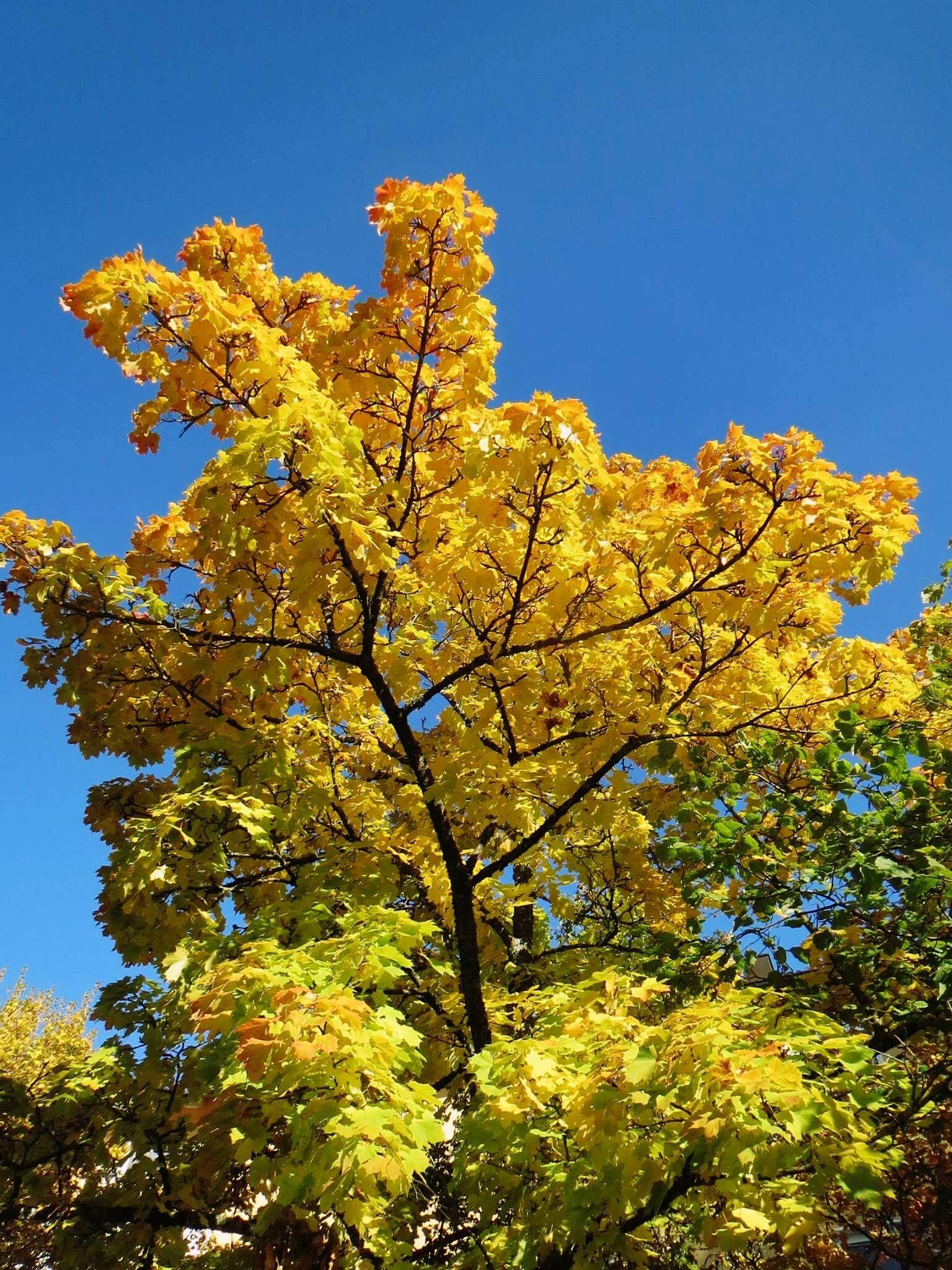 my tipe of Autumn by Iri Rusu