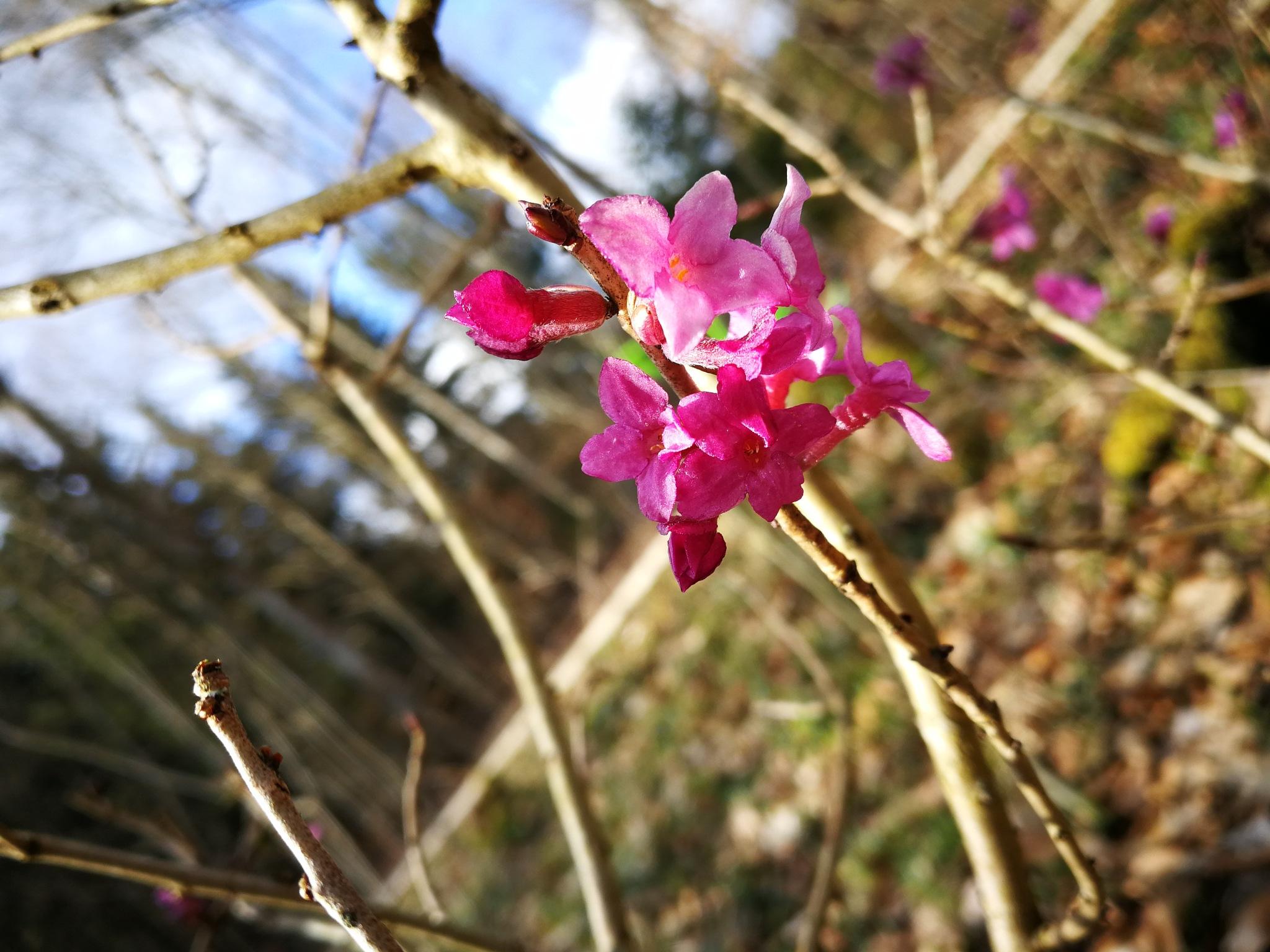 pink... by Iri Rusu