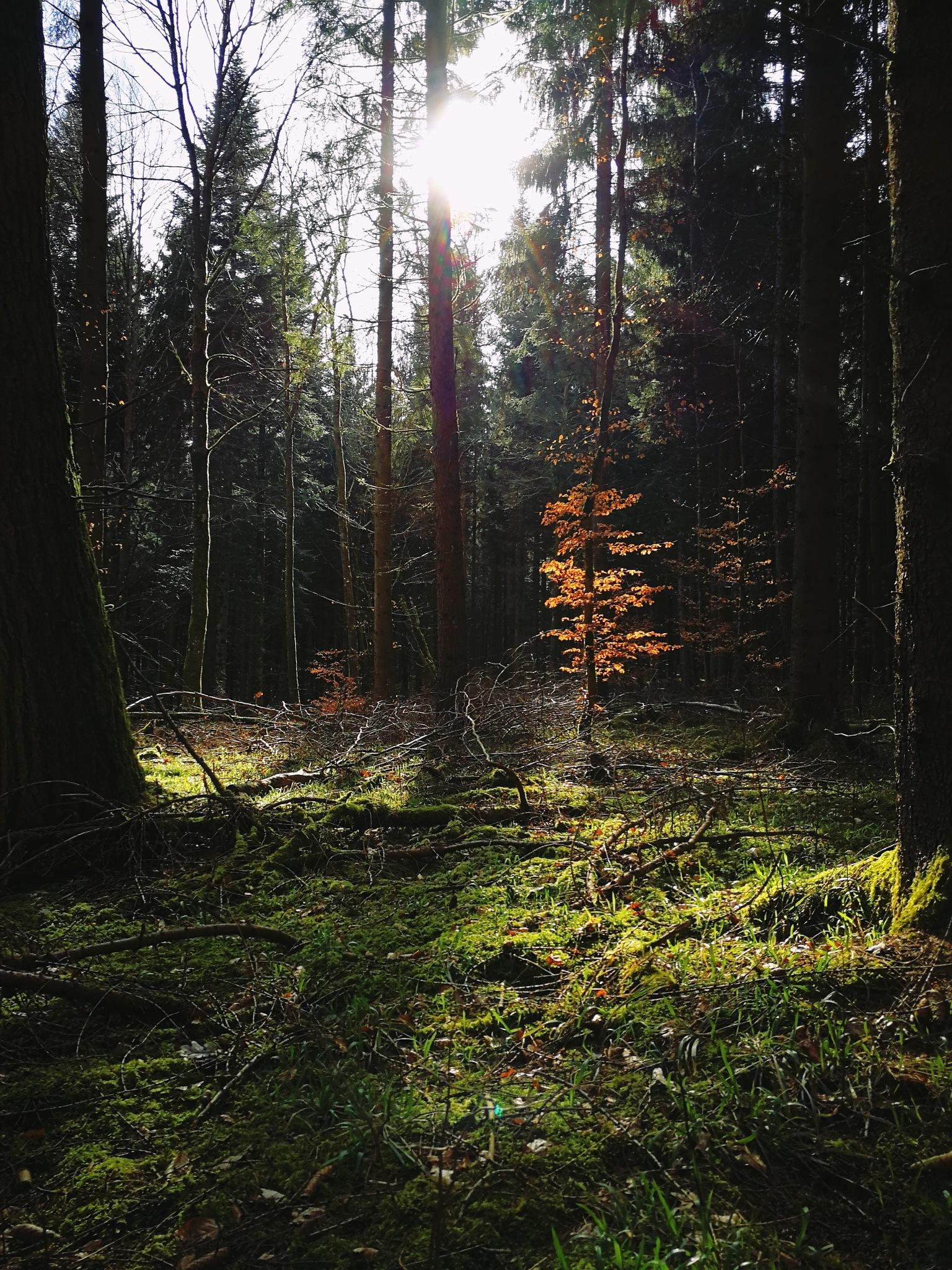 lovely light! by Iri Rusu