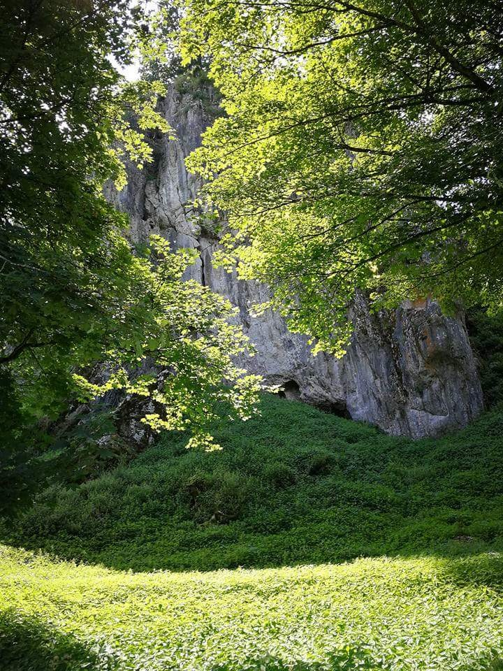 hiding behind the trees by Iri Rusu