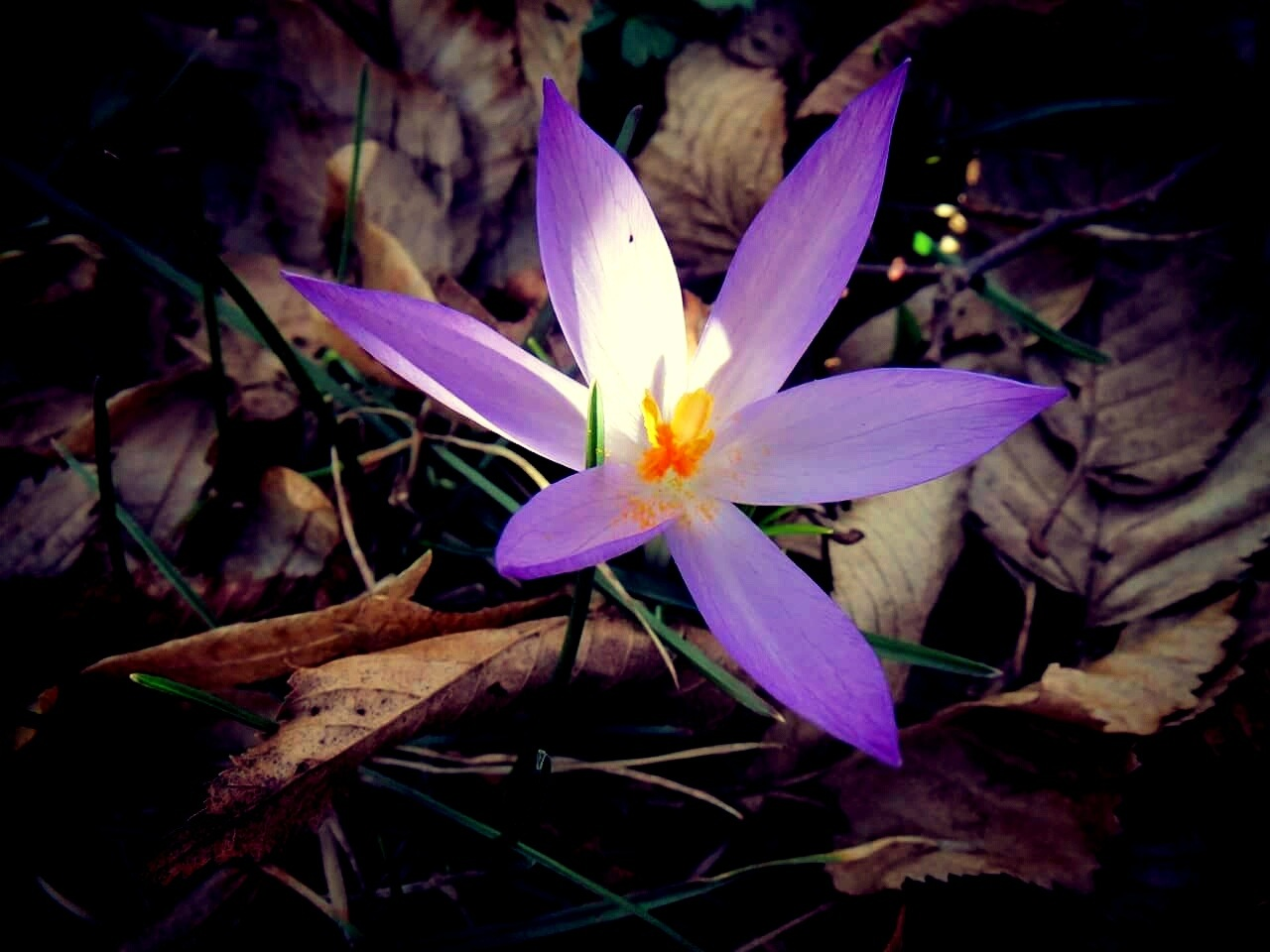 purple star by Iri Rusu