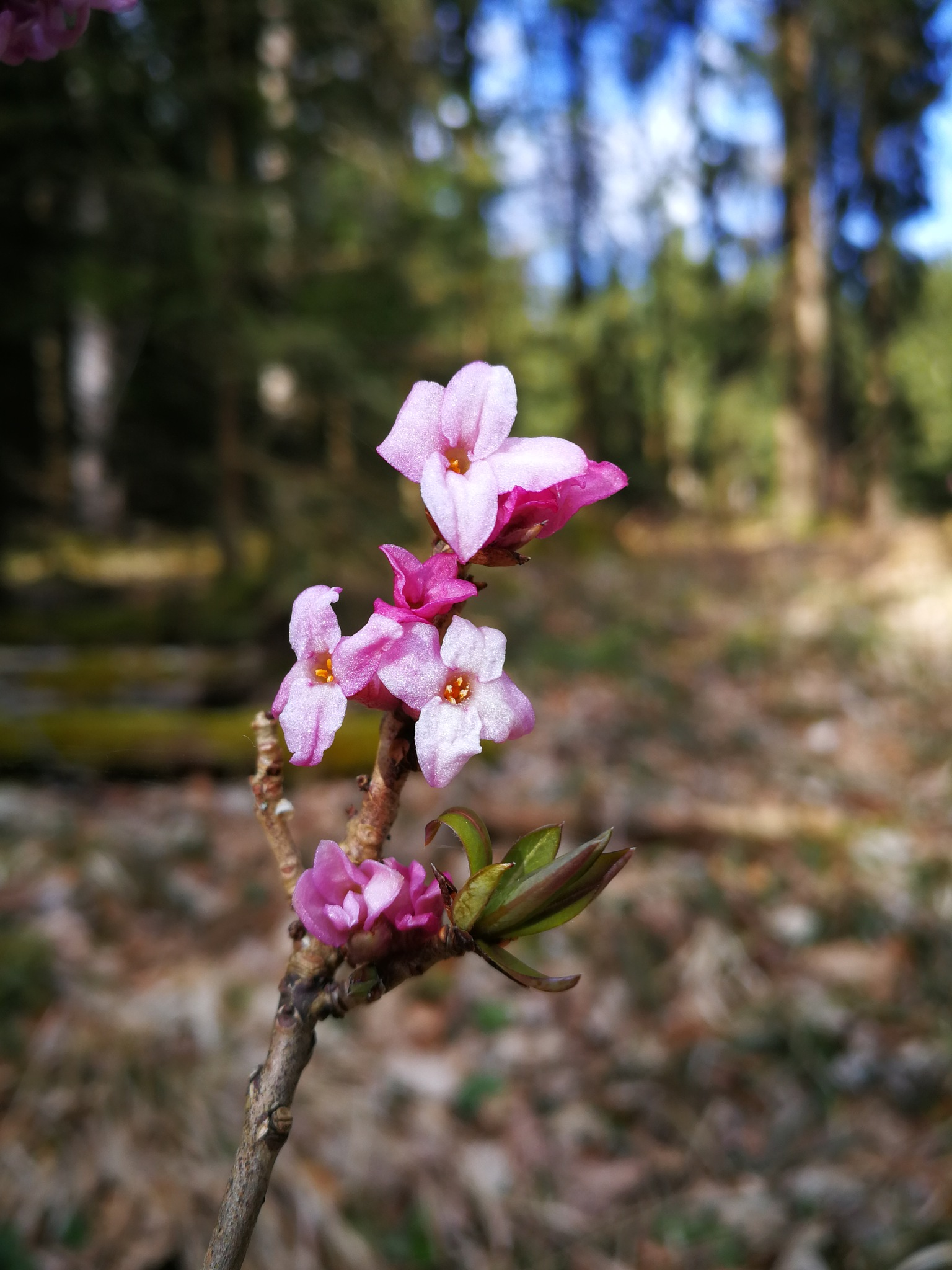 pink flowers...blue sky by Iri Rusu