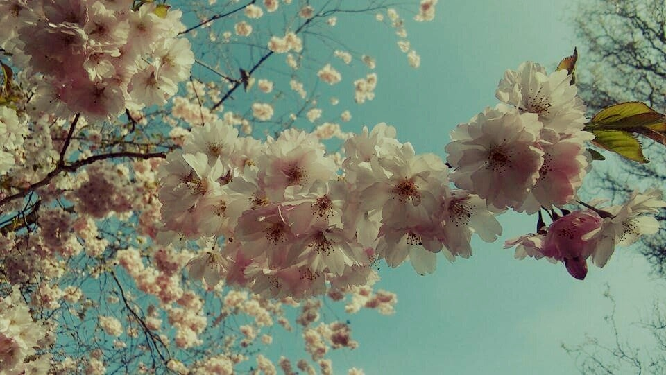 spring perfume by Iri Rusu