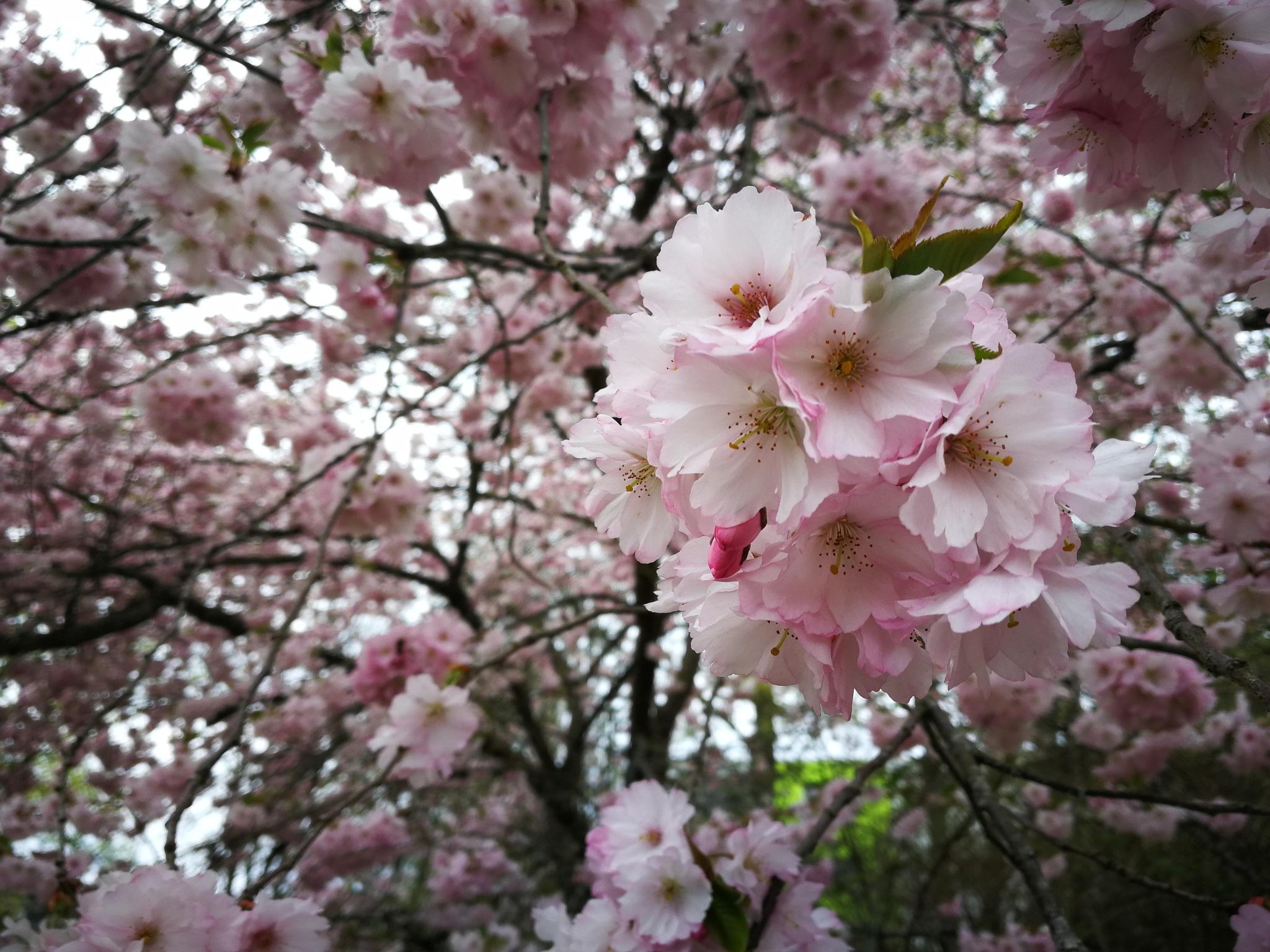 romantic spring by Iri Rusu