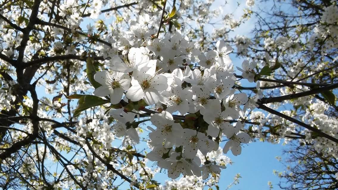 the light of spring...full of promises by Iri Rusu