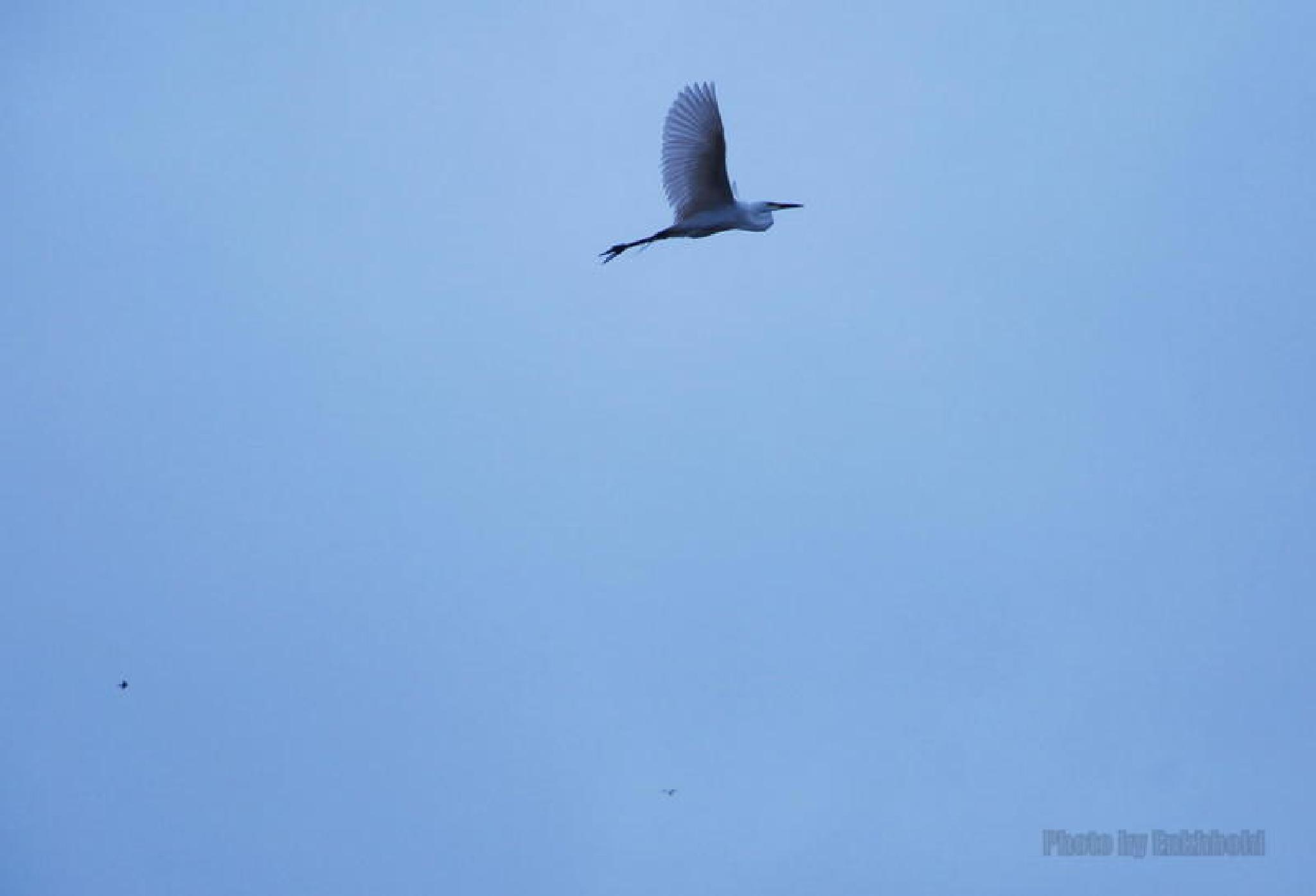 Flying by Eboseiko