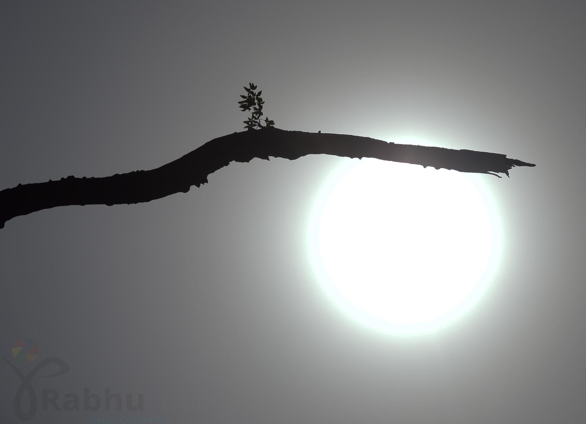 Sun Light by prabhuviswa