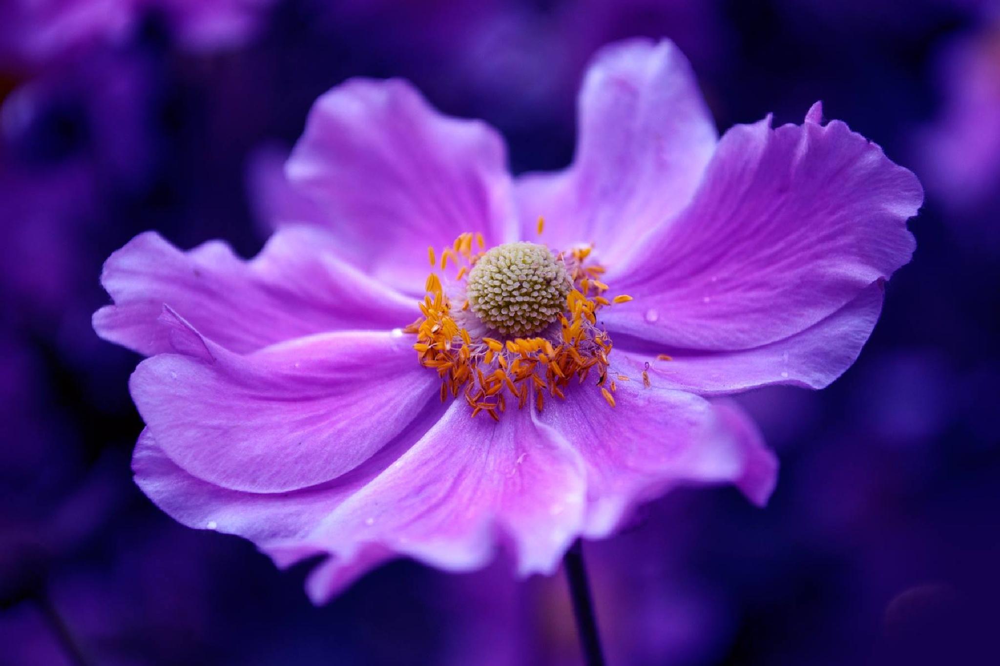 Flower by Britta Rogge