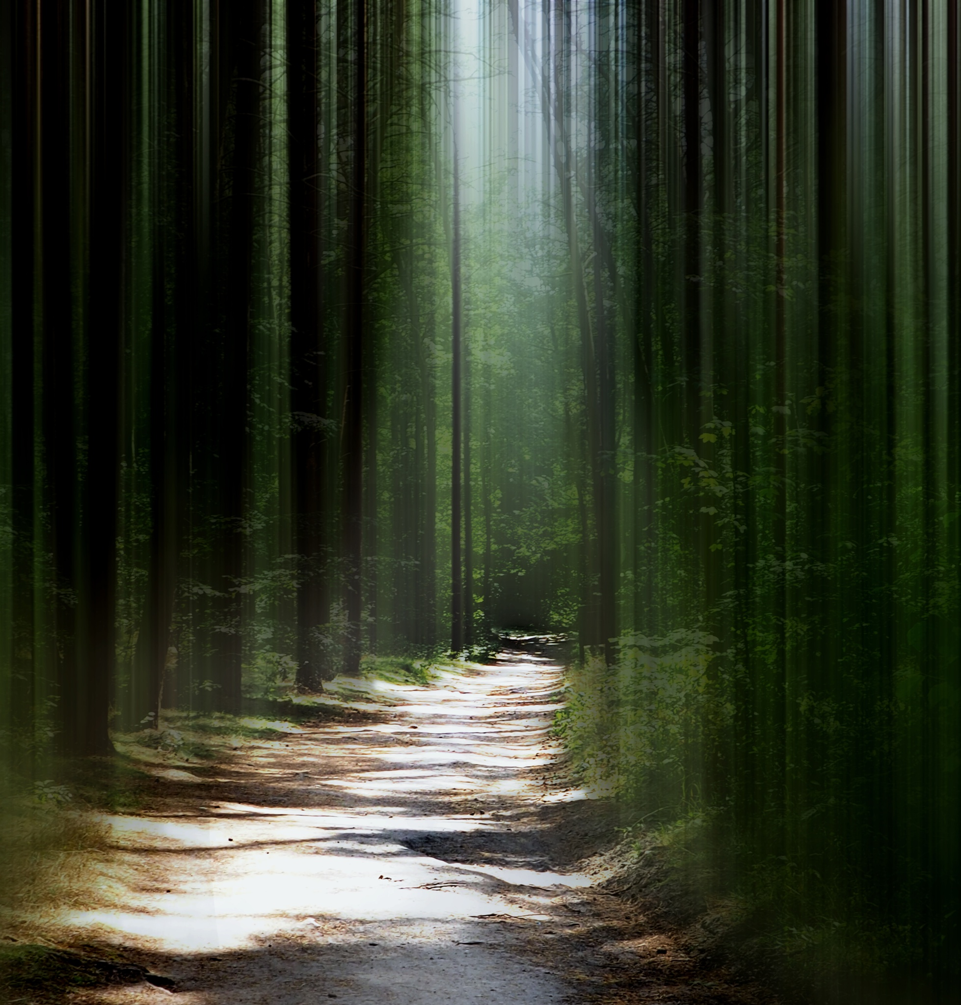 Forest by Britta Rogge