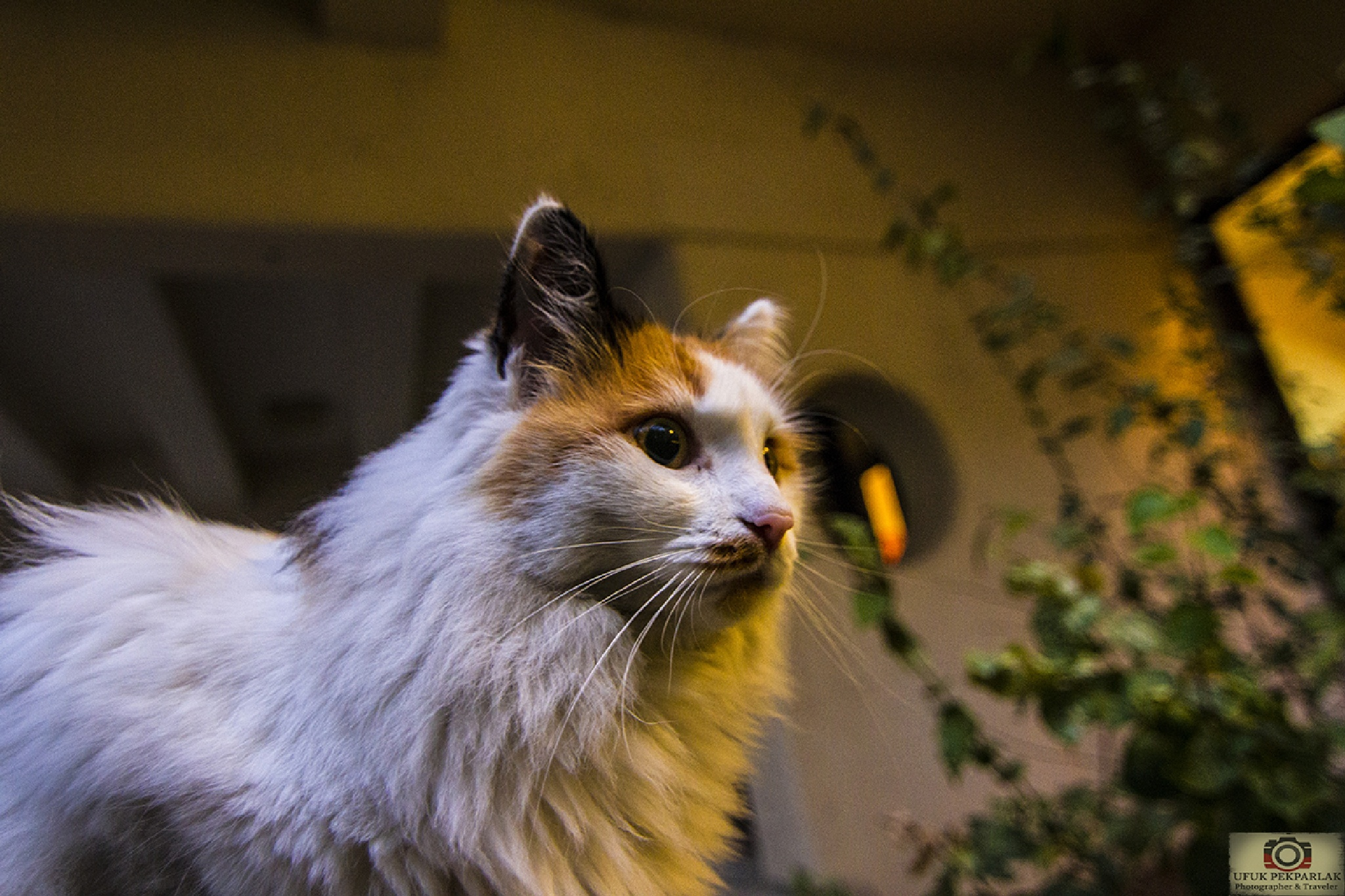 CAT  by ufukpekparlak