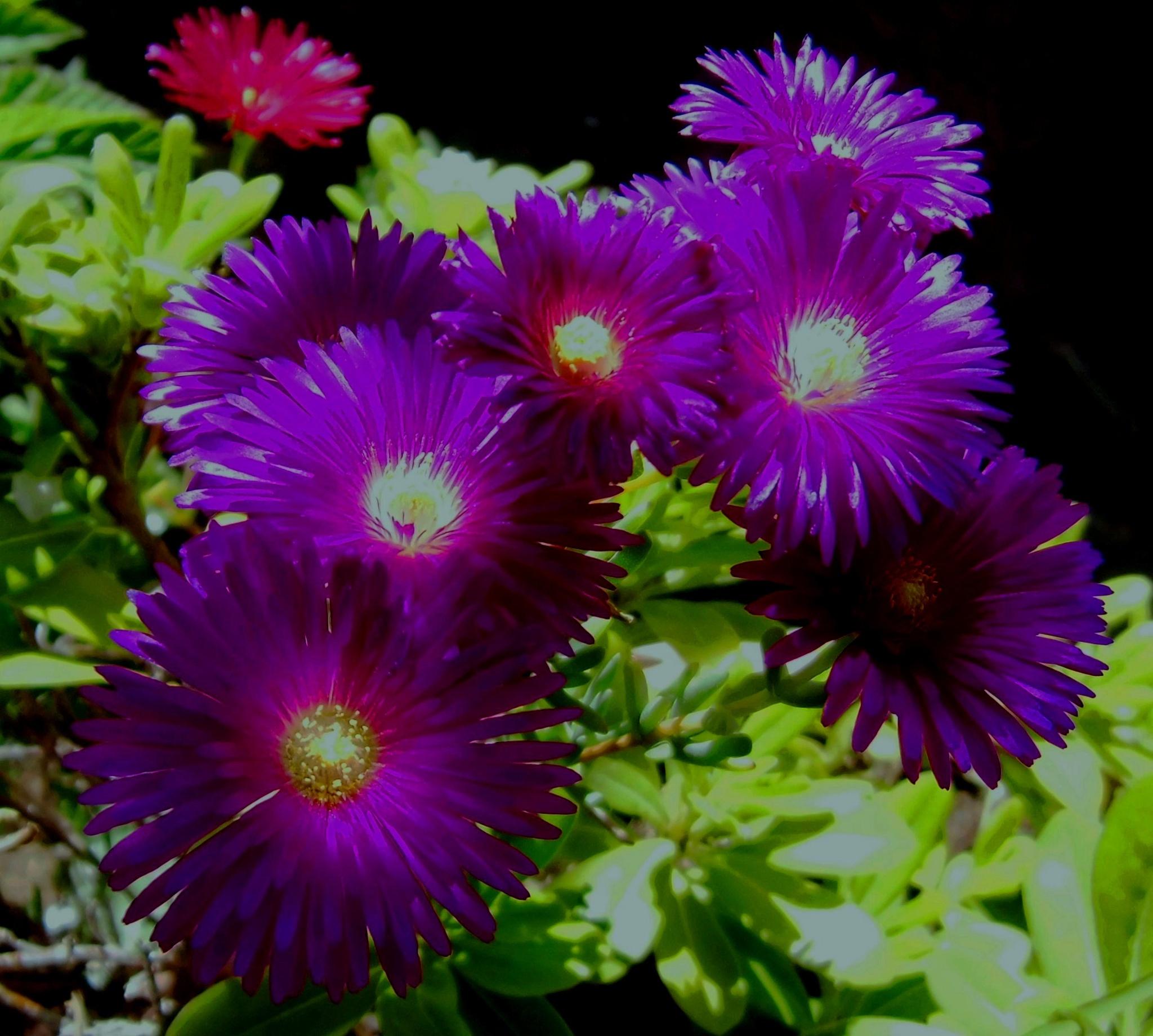 Flower by ihsangulf9