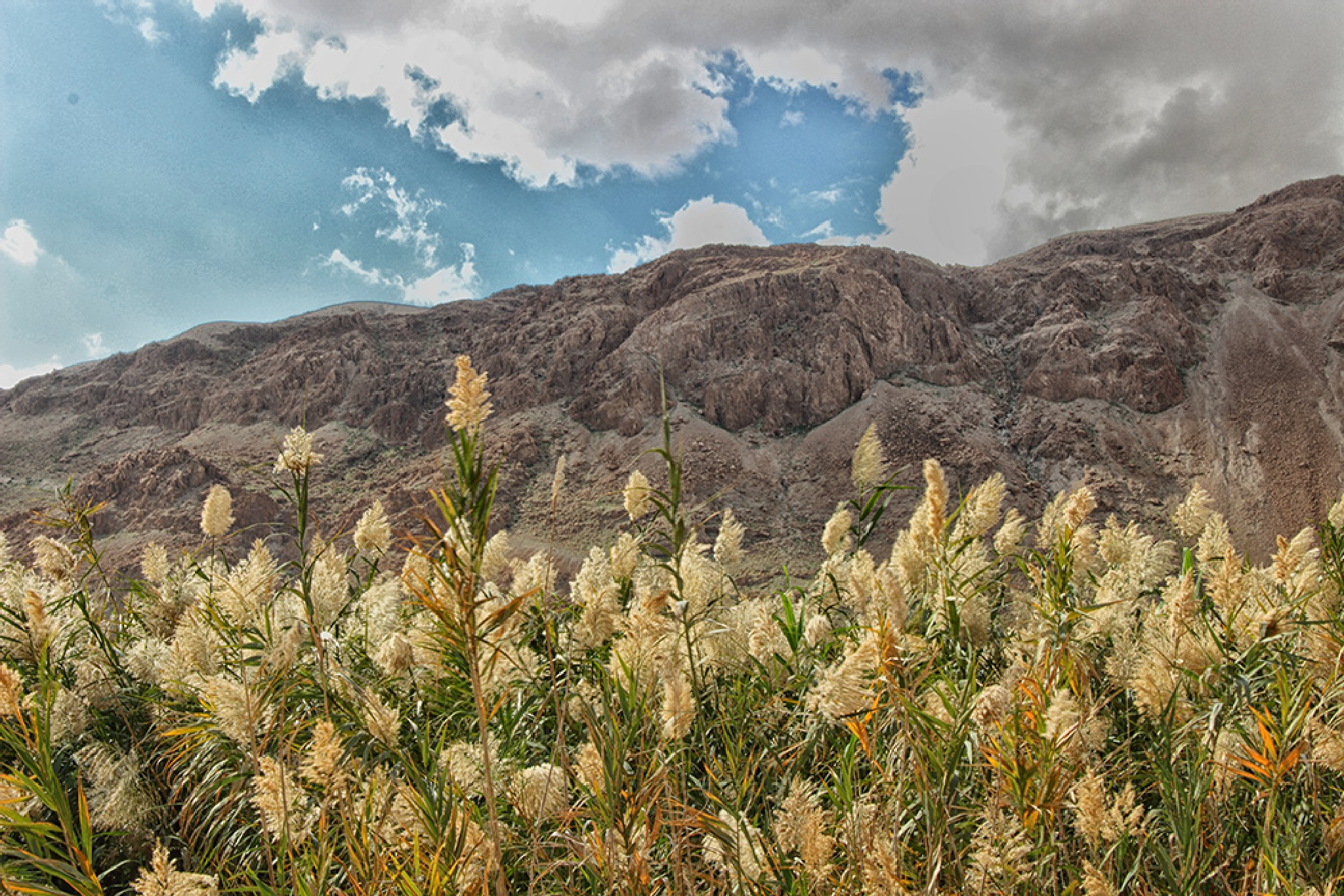 Reed in a national park near the Dead Sea. by Alla Ilyin