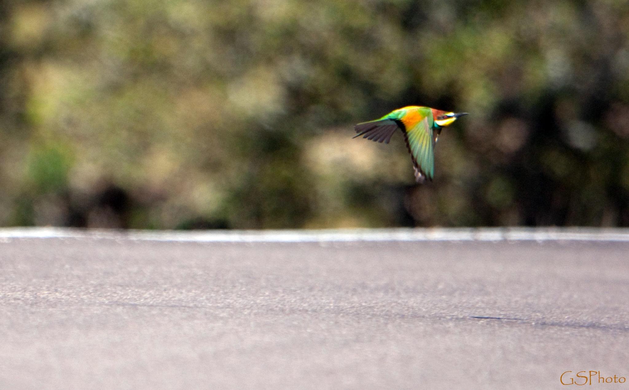 Sur la route. by GSPhoto