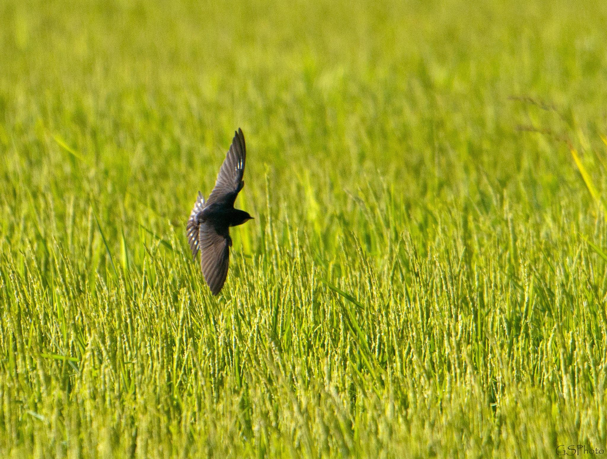 Virage sur l'aile. by GSPhoto