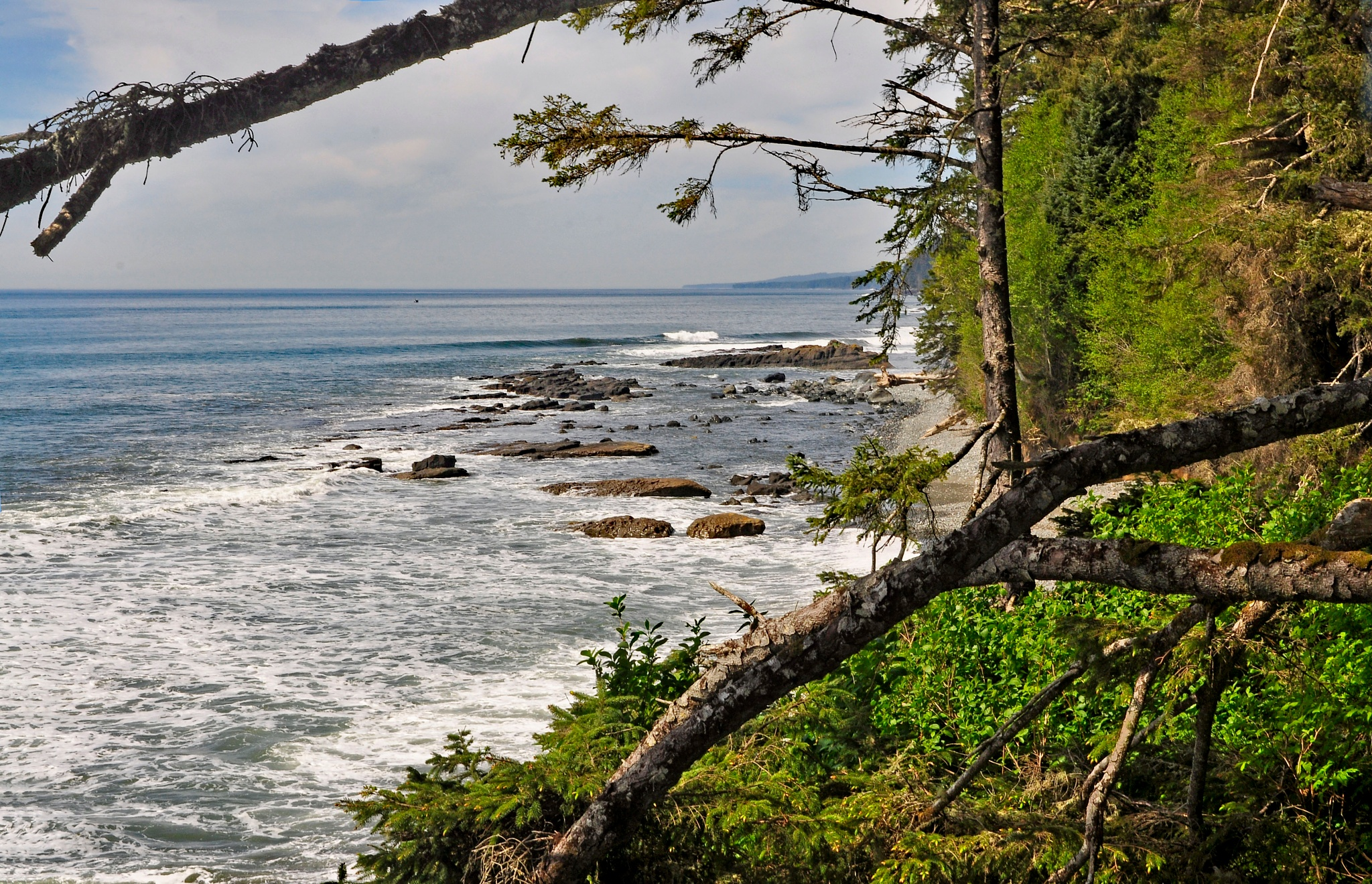 The coast from the forest by Daverr