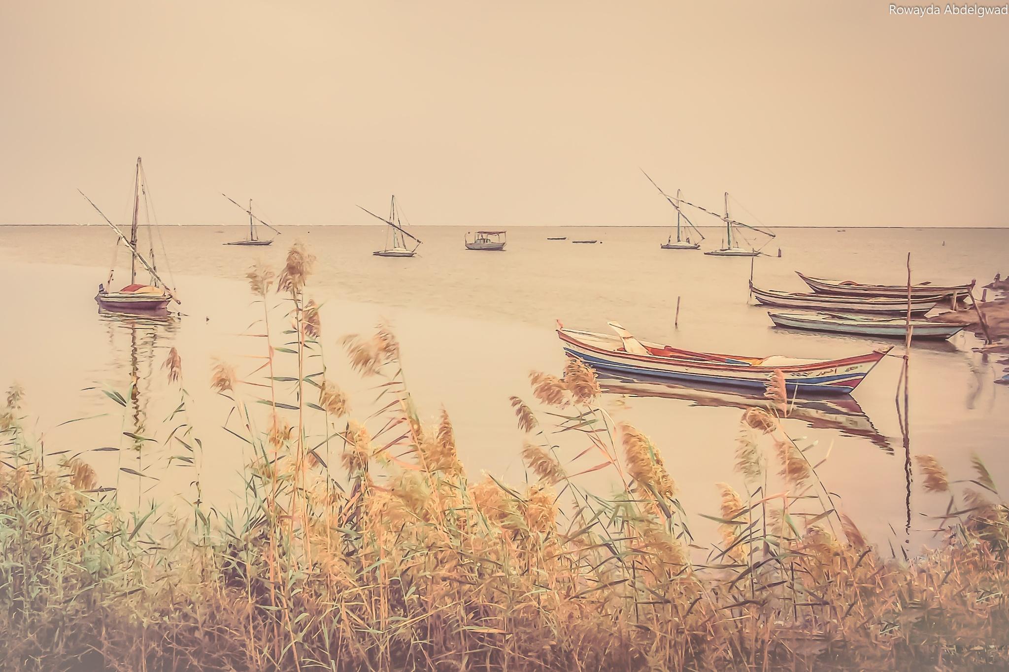 The magic of nature by Rowayda Abdelgwad