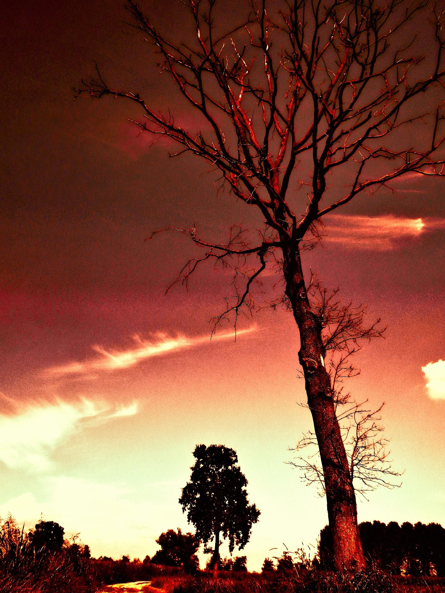 Landscape in red by monicarla