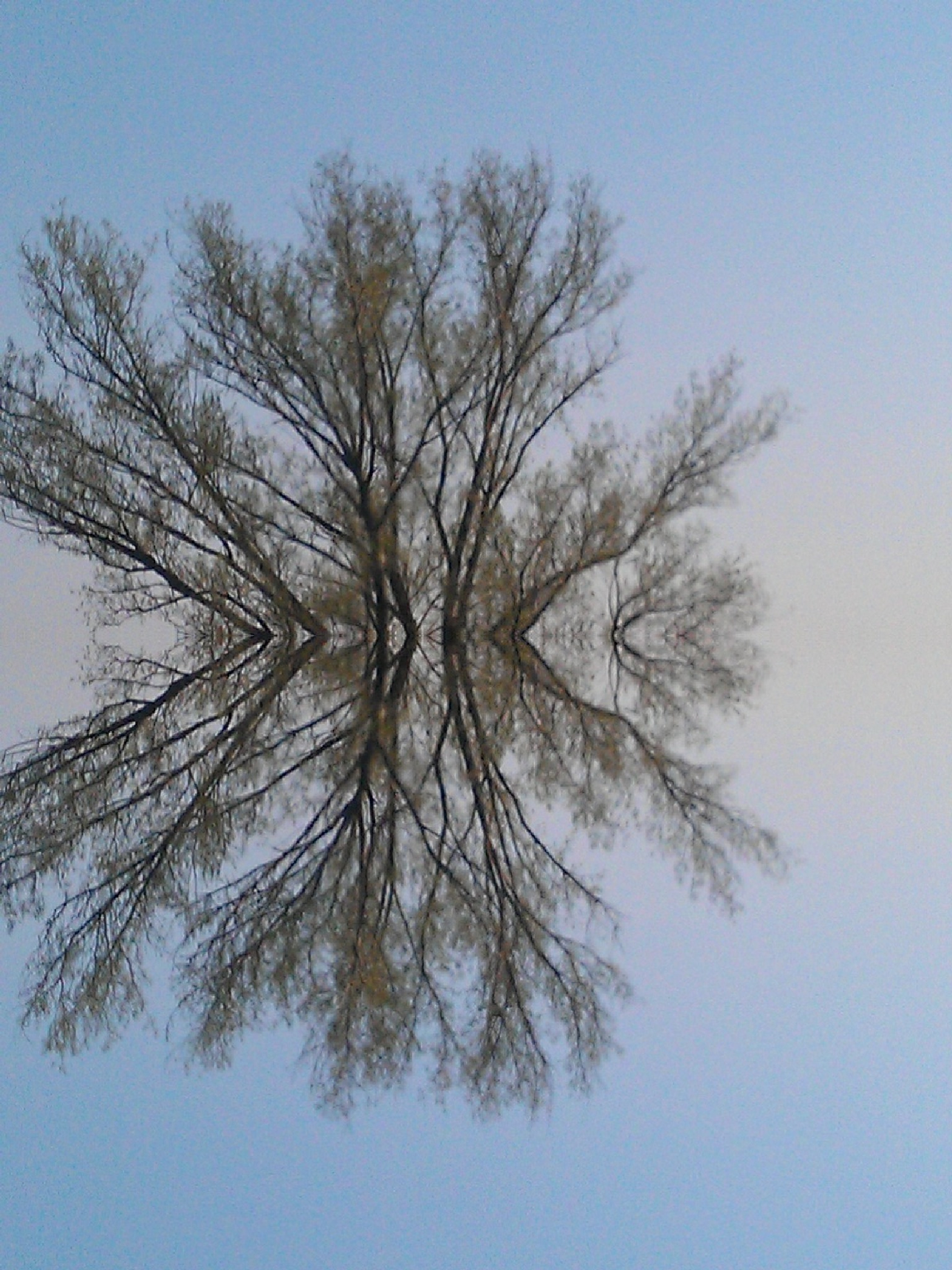 Branches reflected by monicarla