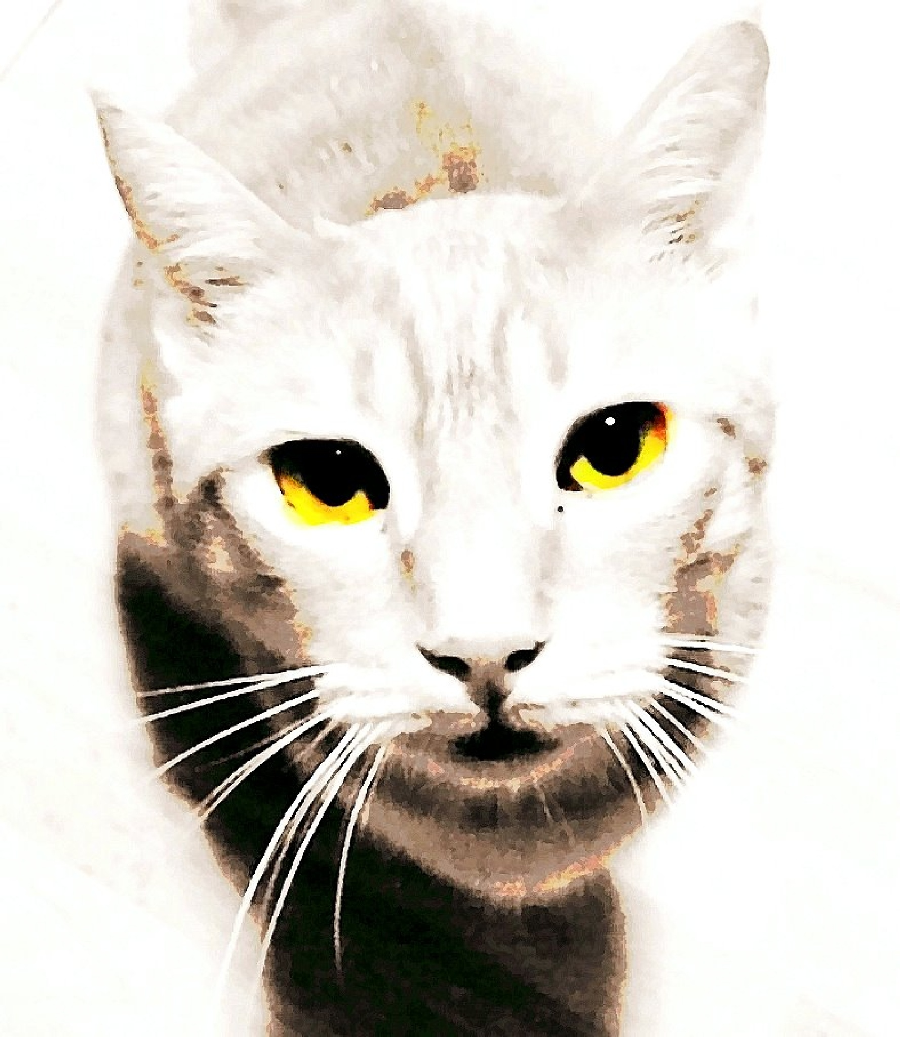 My cat Bimbo by monicarla