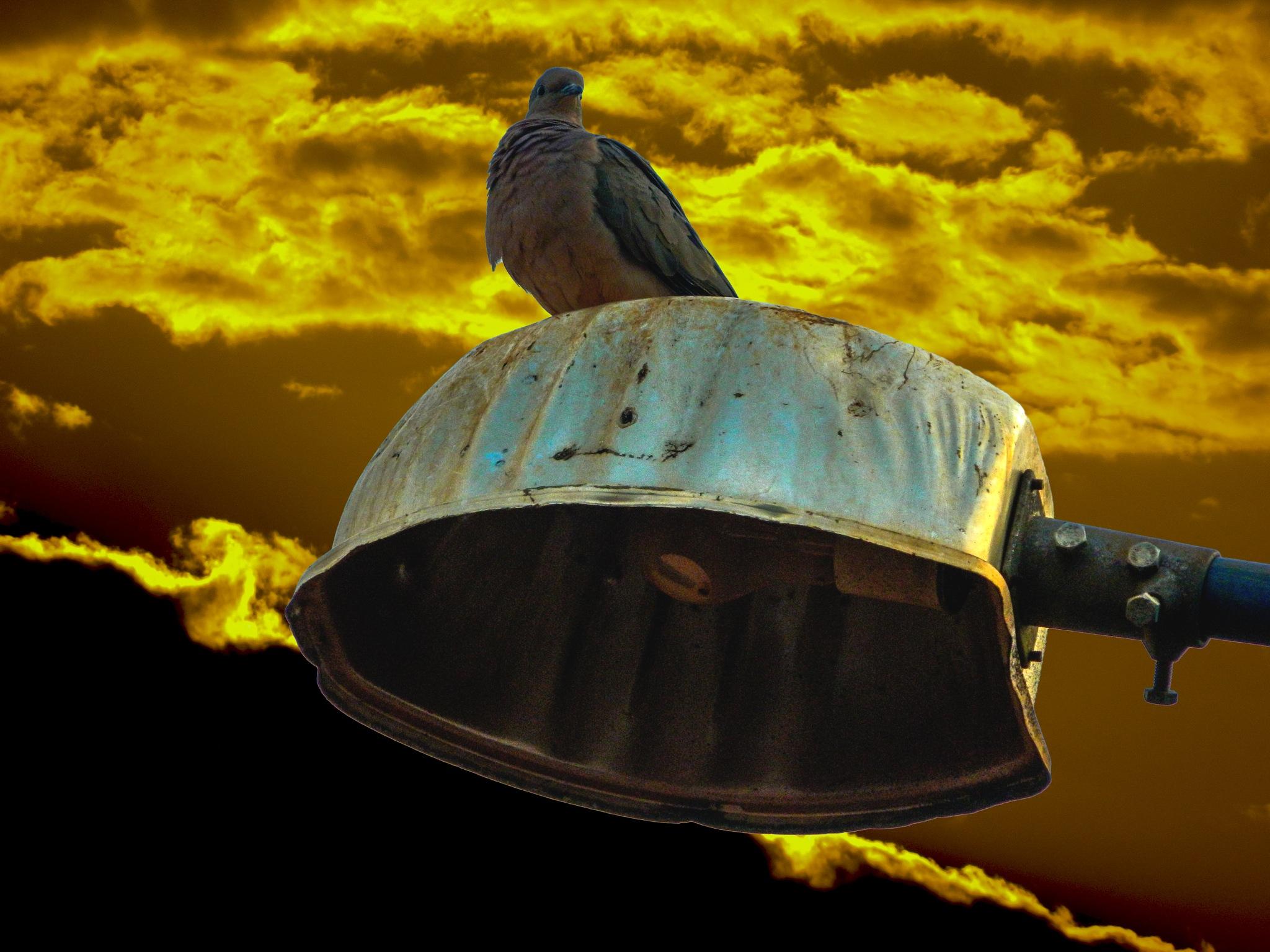 Sunset, pigeon and light by Marcos Verardino