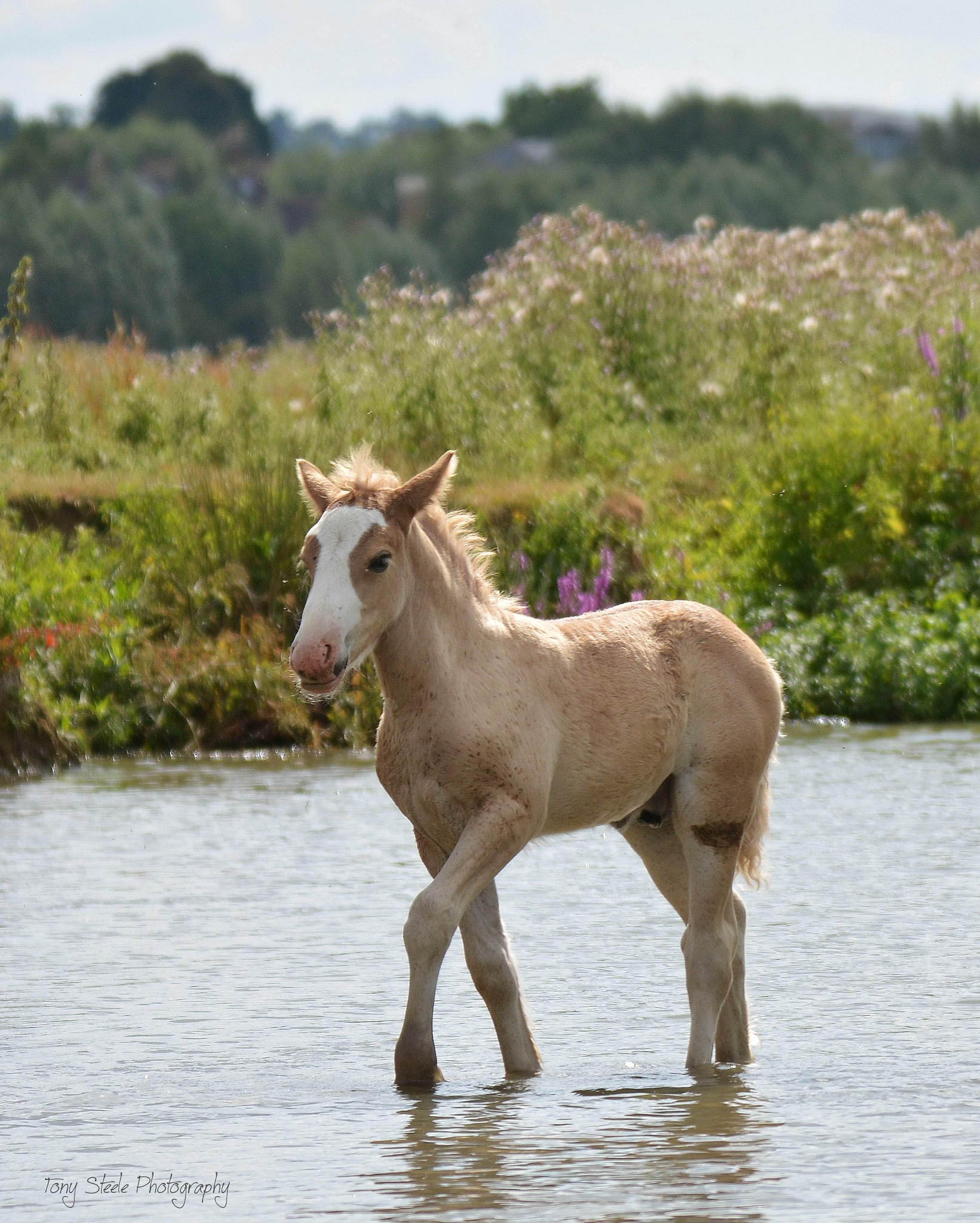 A cute foal at Port Meadow,Oxford by Tony Steele