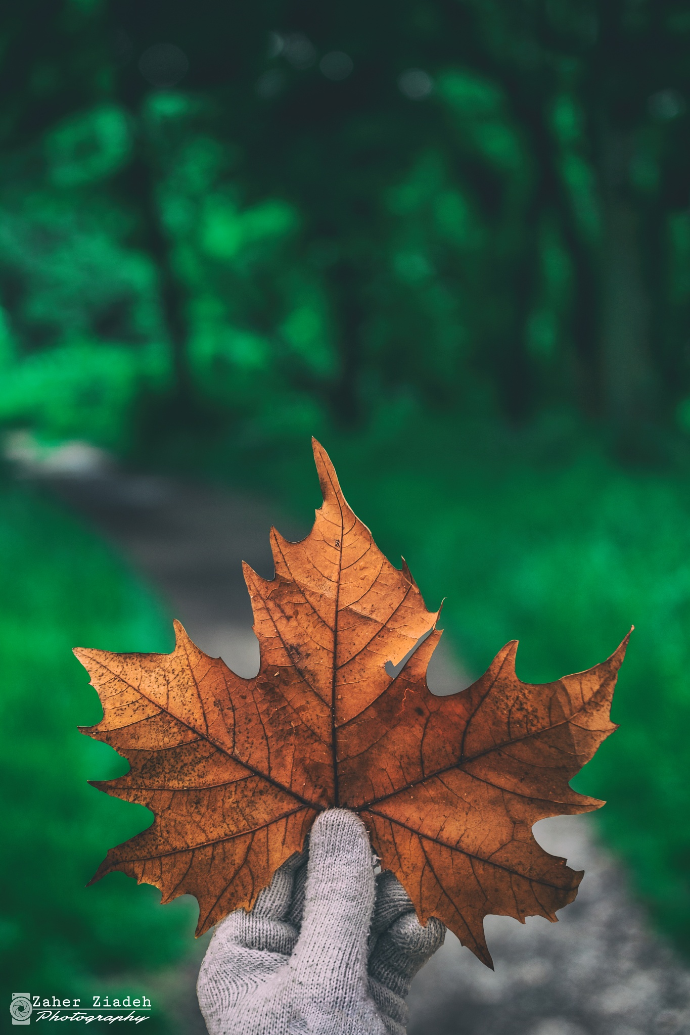 Photo in Random #fine #aemrt #fineart #autumn #leave #spring #sammur #life #green #still #life