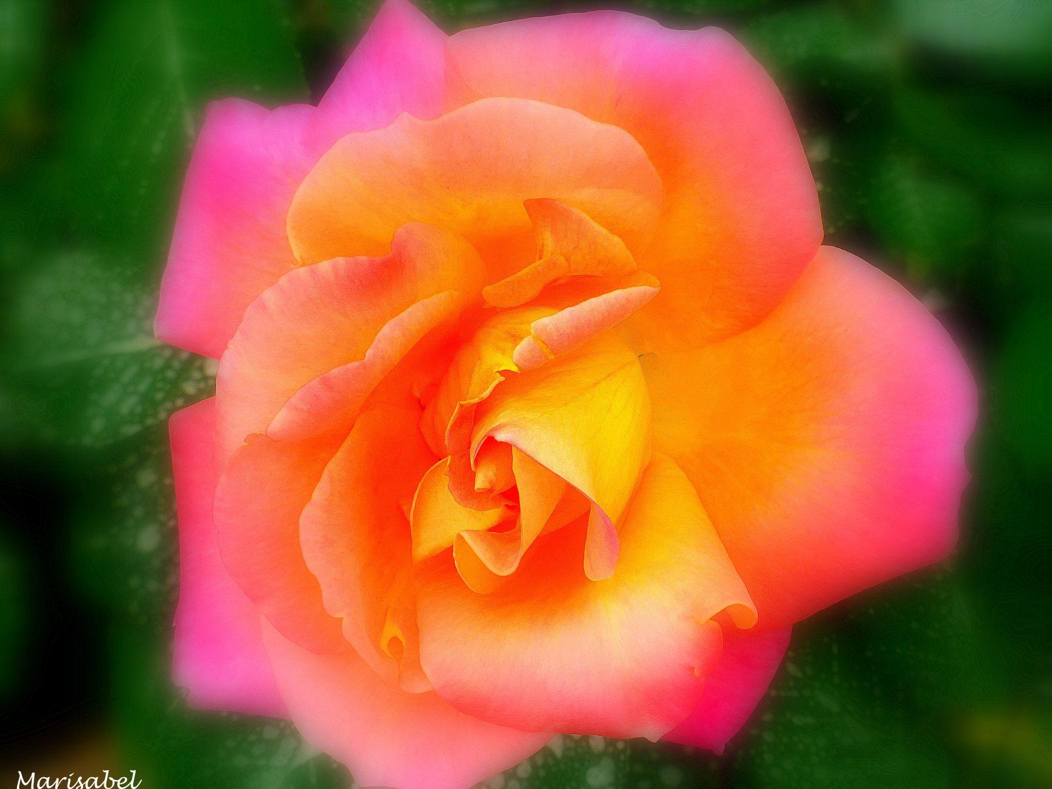 El color de la primavera ! by marisabelcaferri