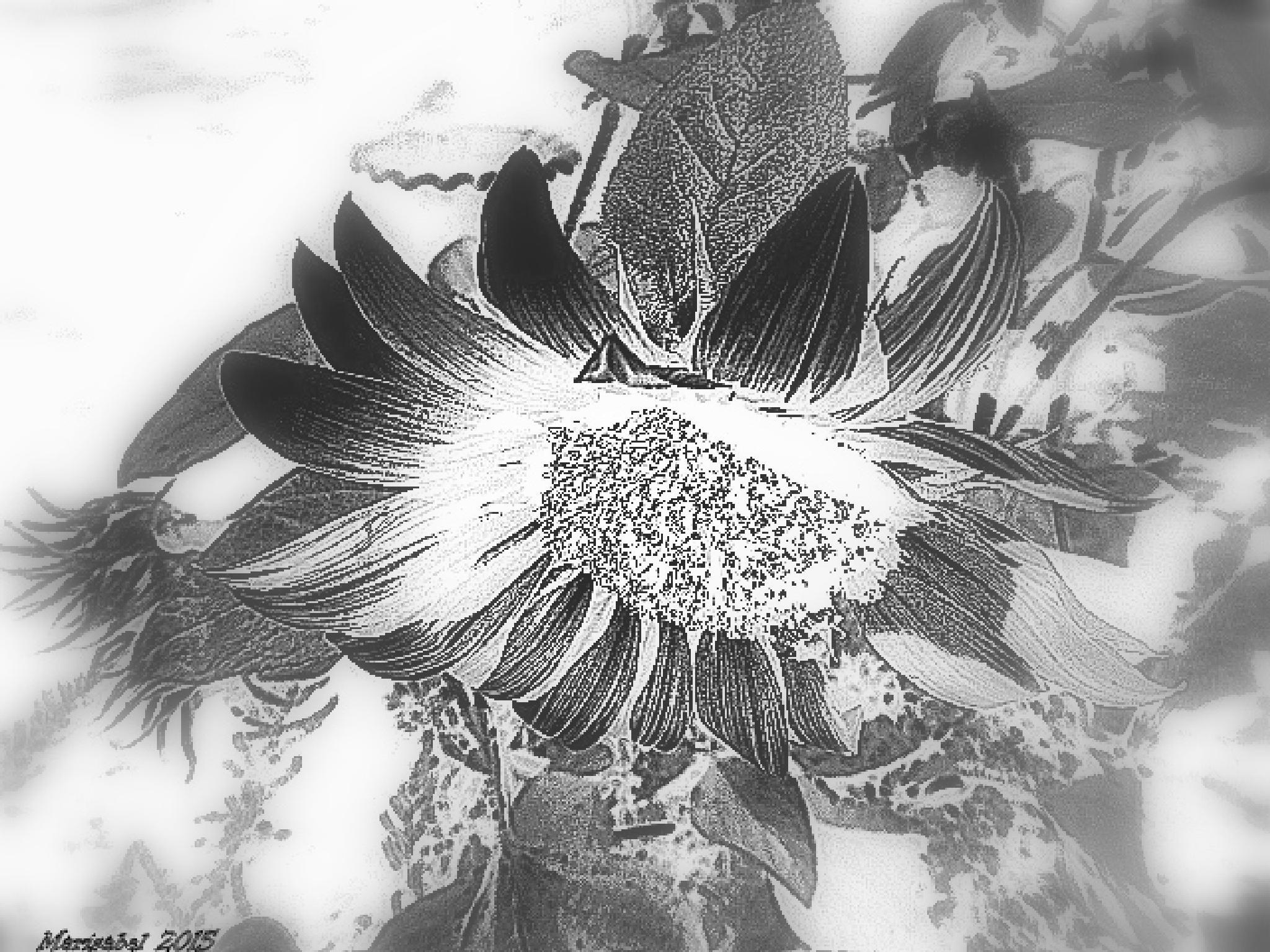 Los girasoles en blanco y negro son bellisimos ! by marisabelcaferri