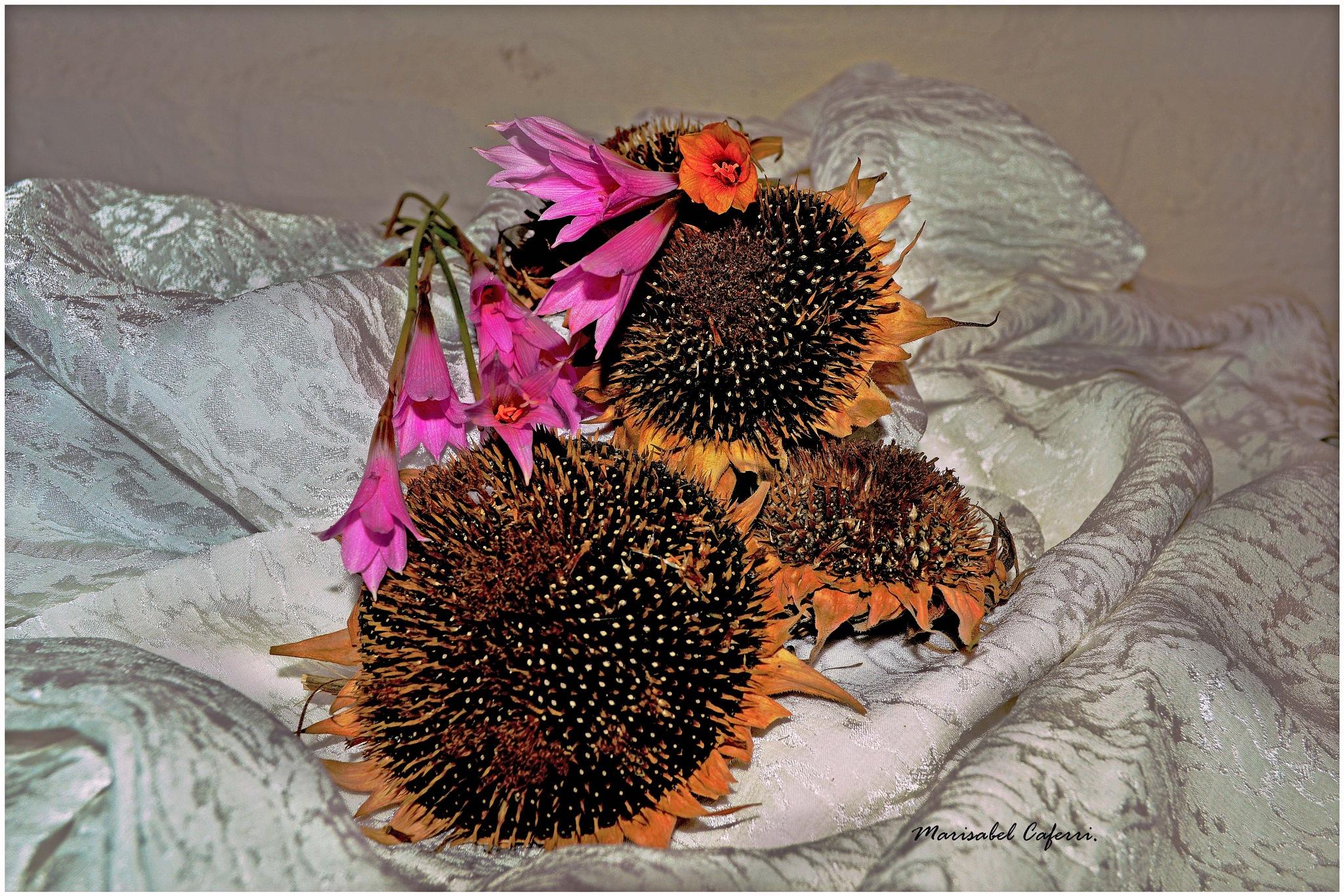 Flores nuevas y semillas de las que ya florecieron .. by marisabelcaferri