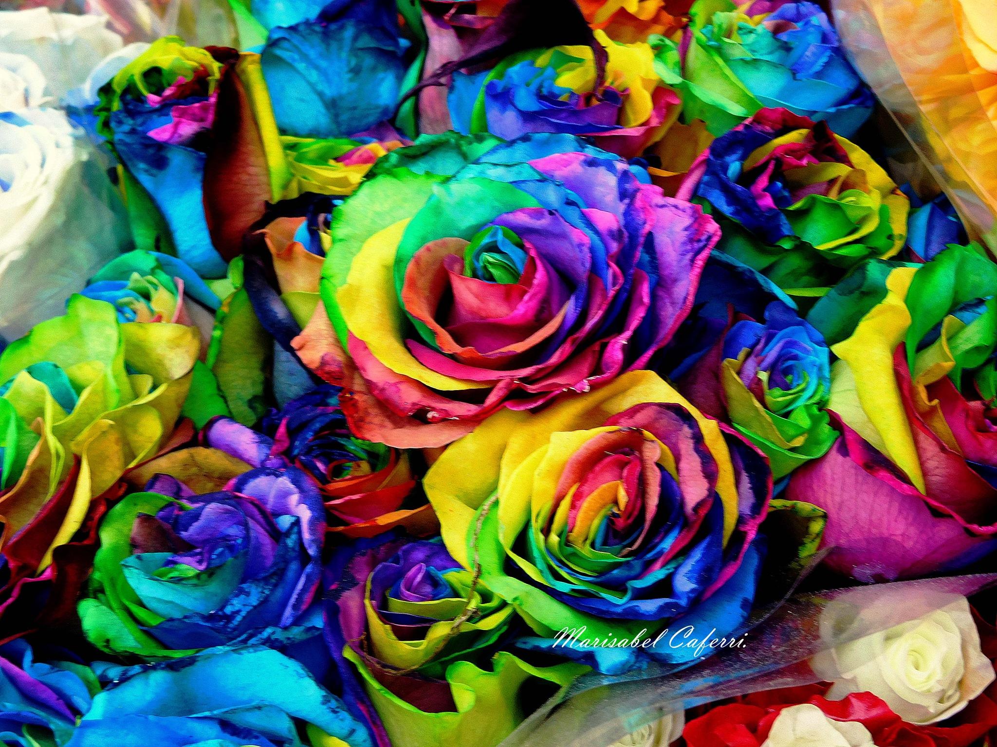 Rosas muy diferentes... by marisabelcaferri