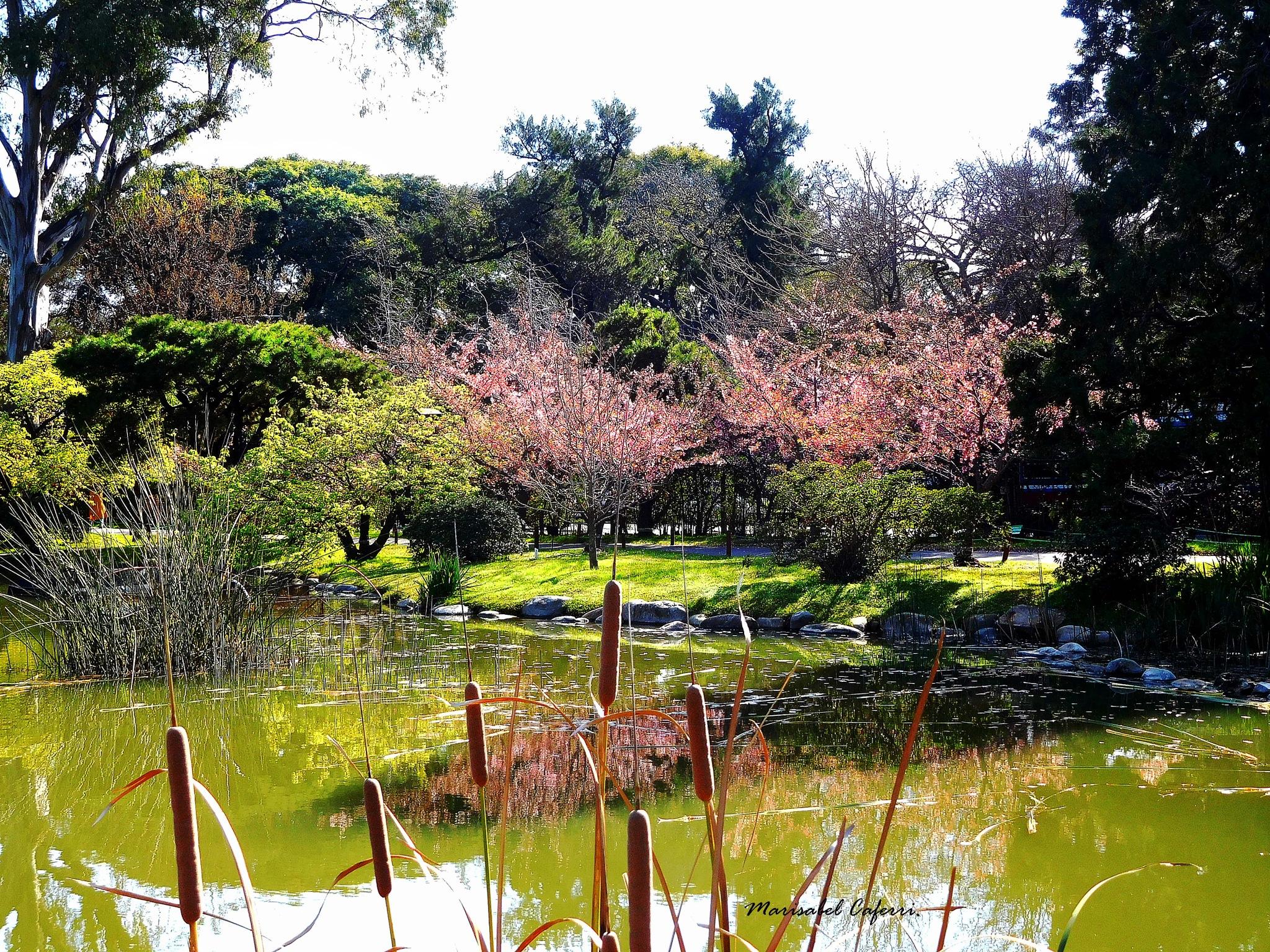 Jardin Japones - by marisabelcaferri