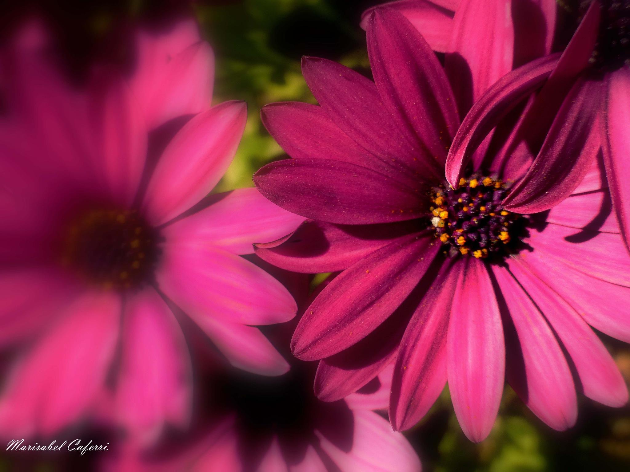flores en primavera . by marisabelcaferri