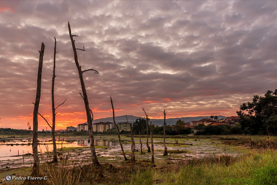 Marshes ... by Pedro Fierro C