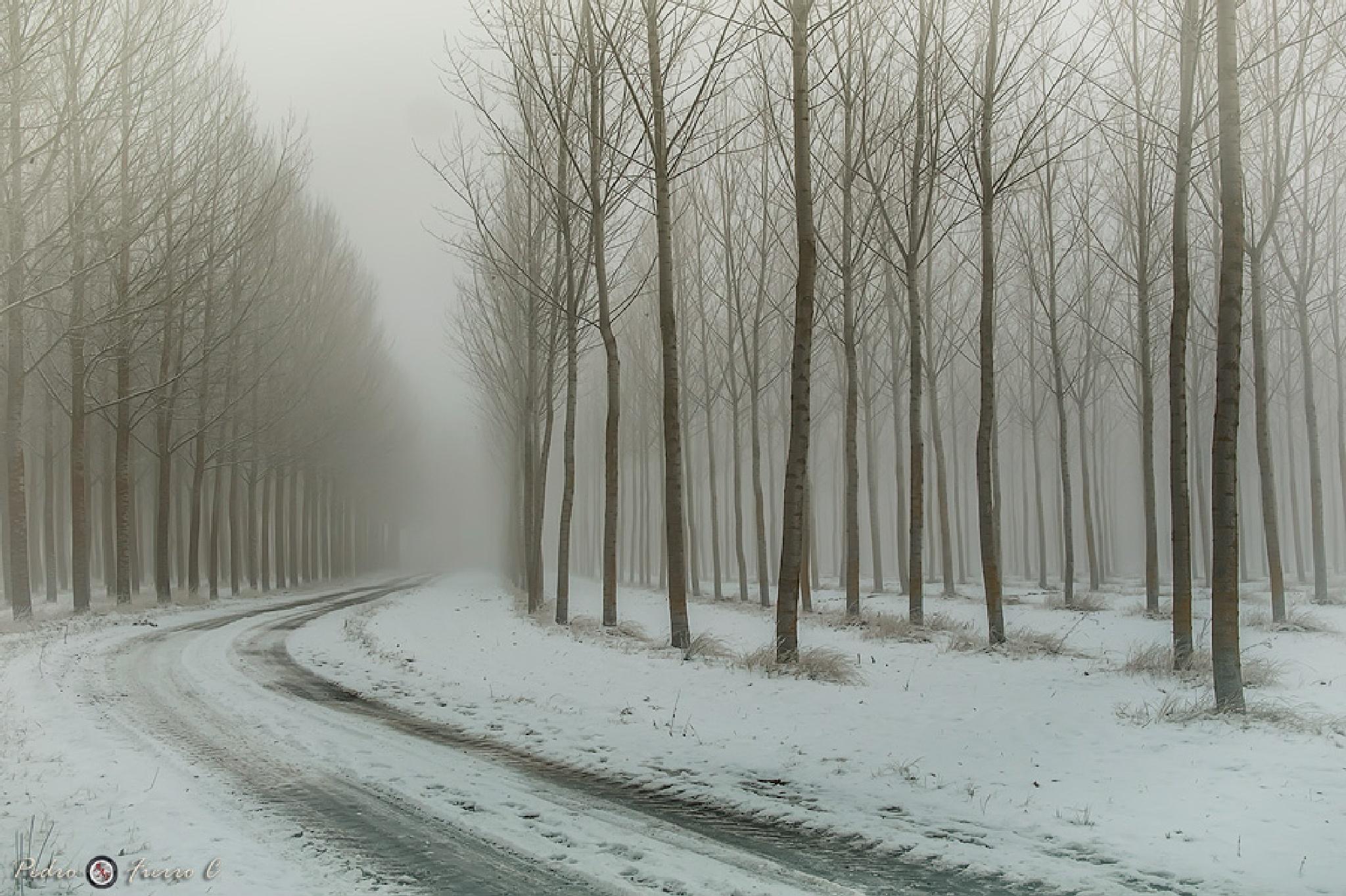 Niebla y frio... by Pedro Fierro C