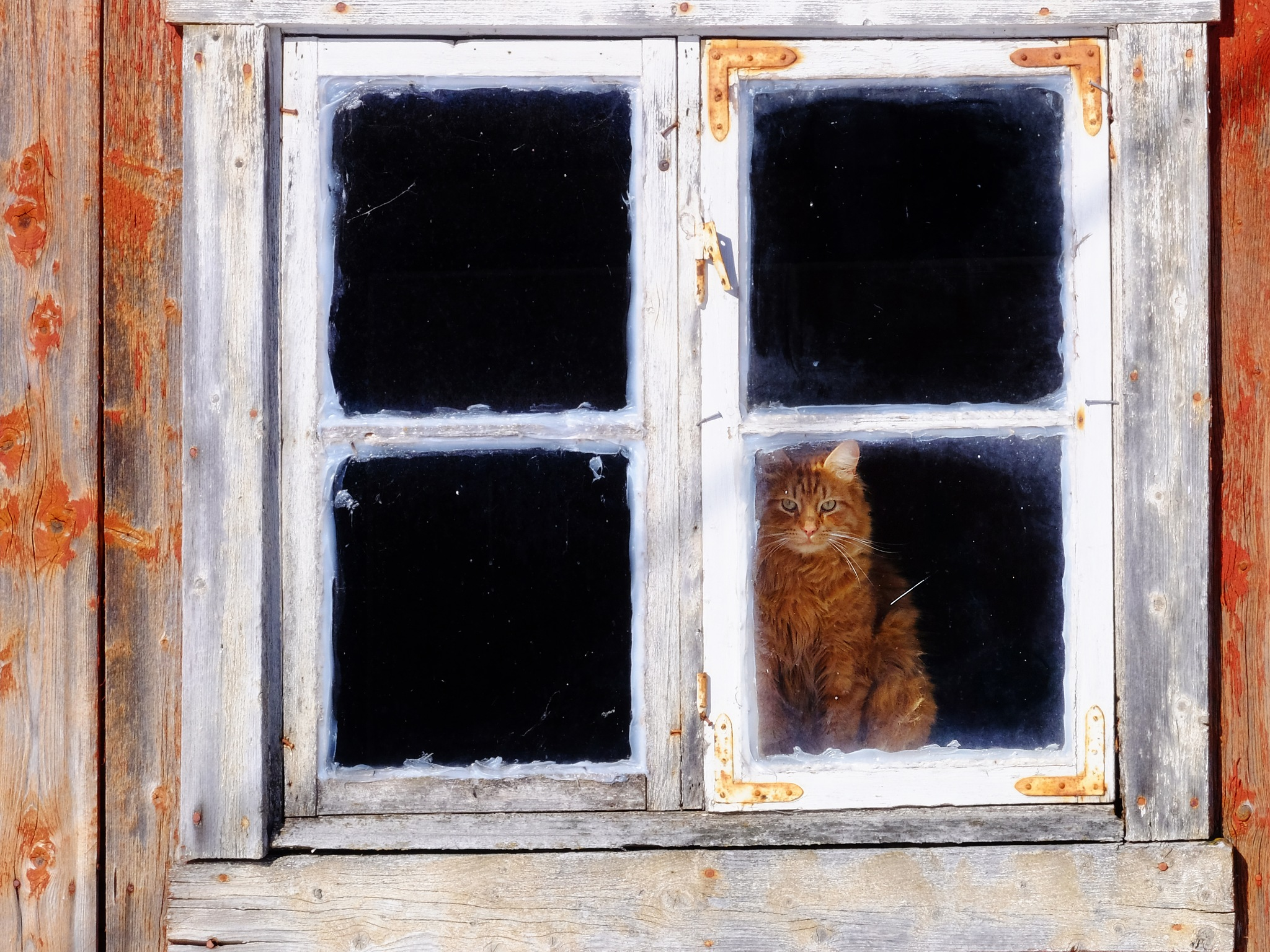 Cat in the old barn window by Jan Arvid Solem