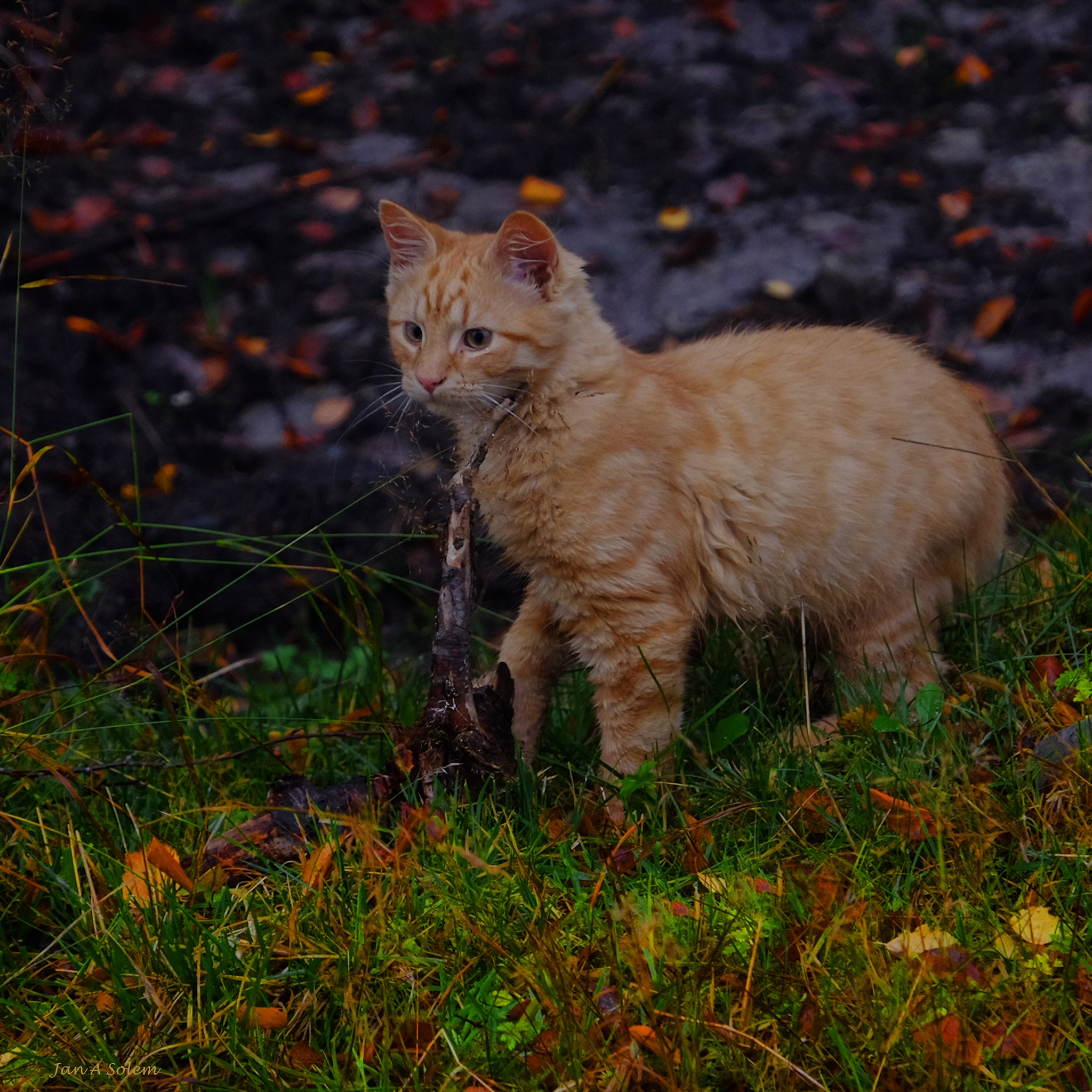 The Autumn Hunter by Jan Arvid Solem
