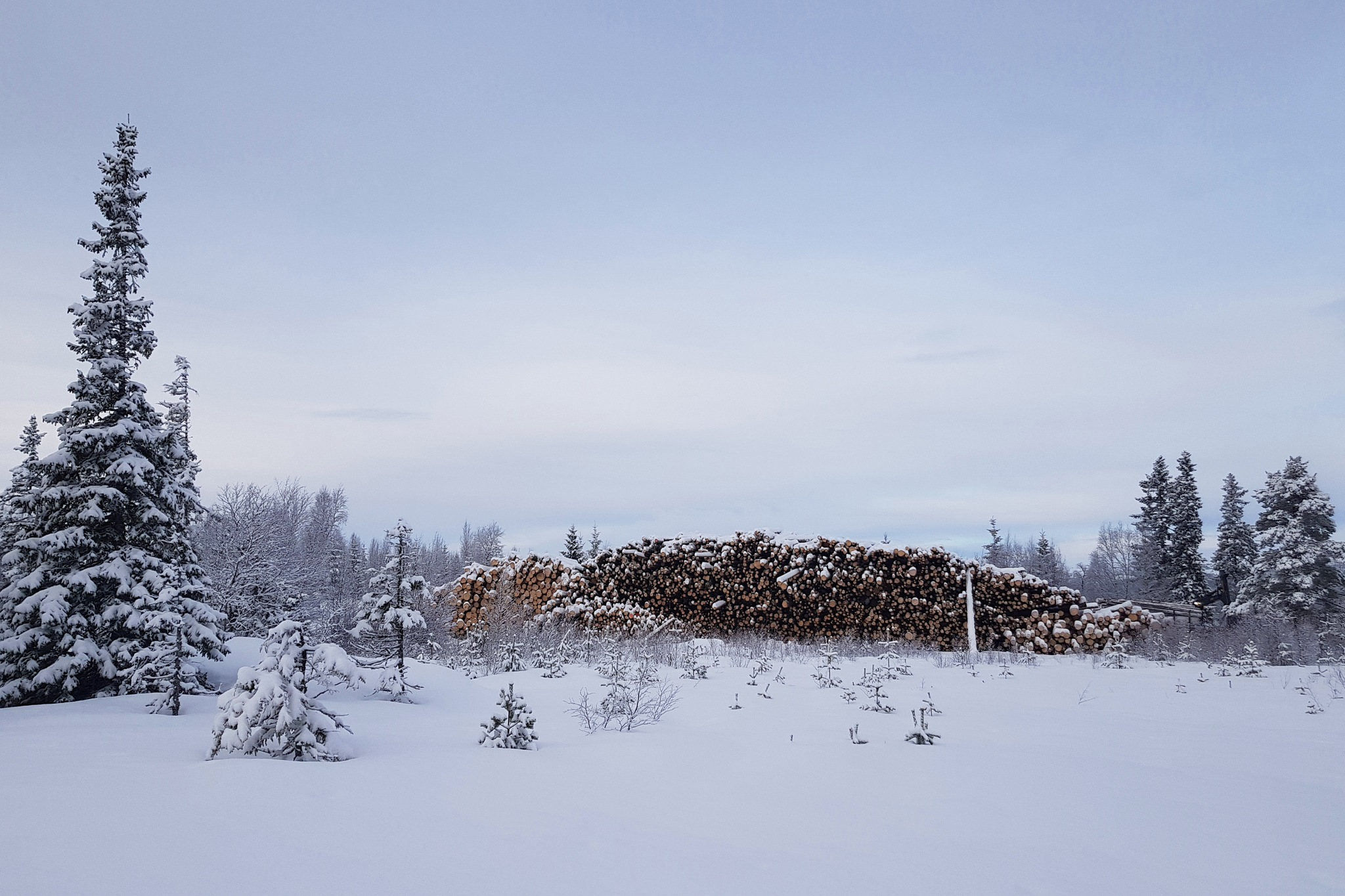 Timber & Nature by Jan Arvid Solem