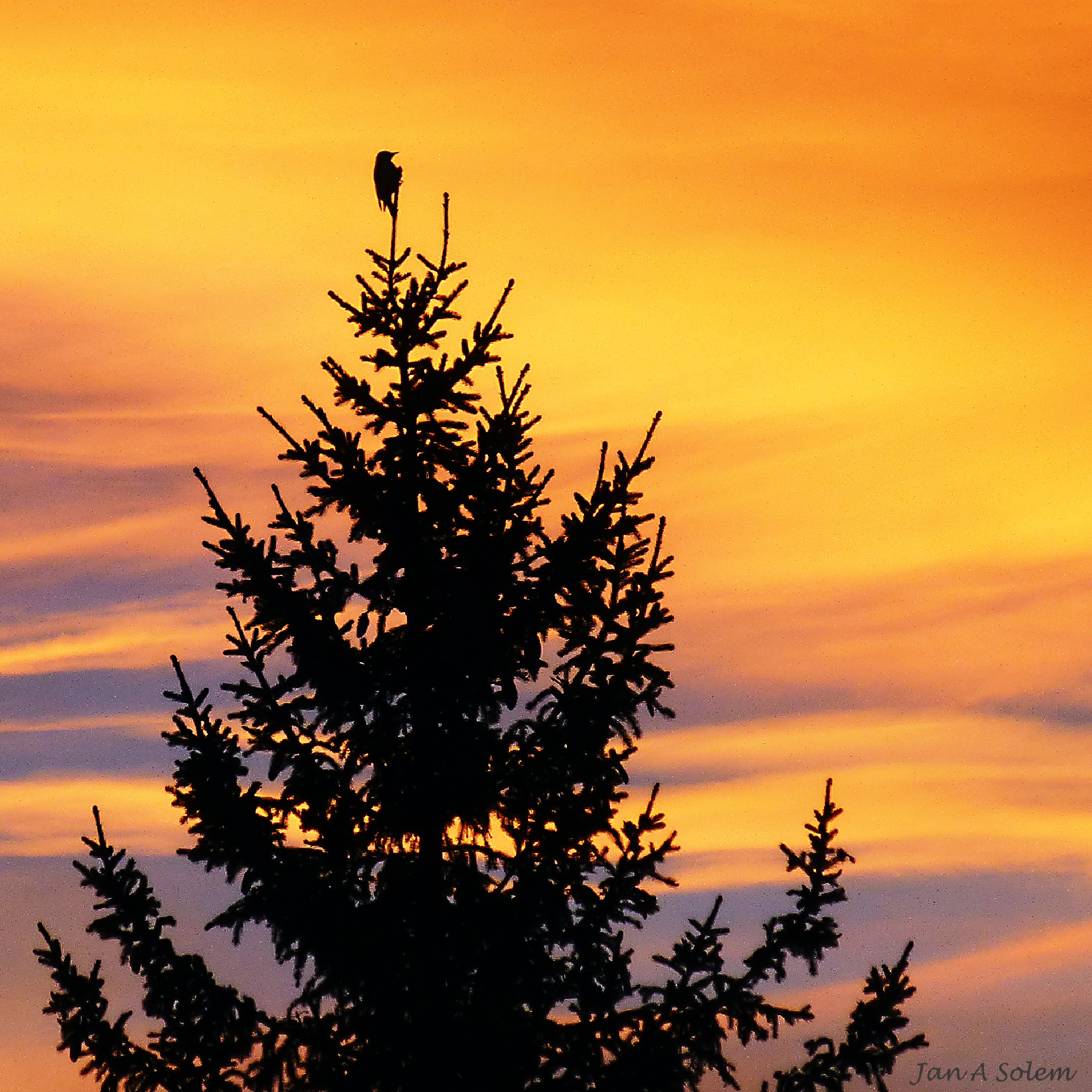 Lone bird at sunrise by Jan Arvid Solem