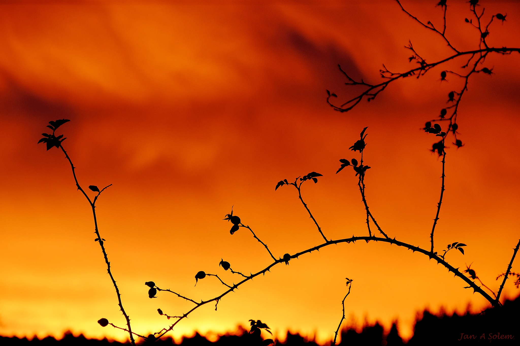Thorns and Sunrise by Jan Arvid Solem