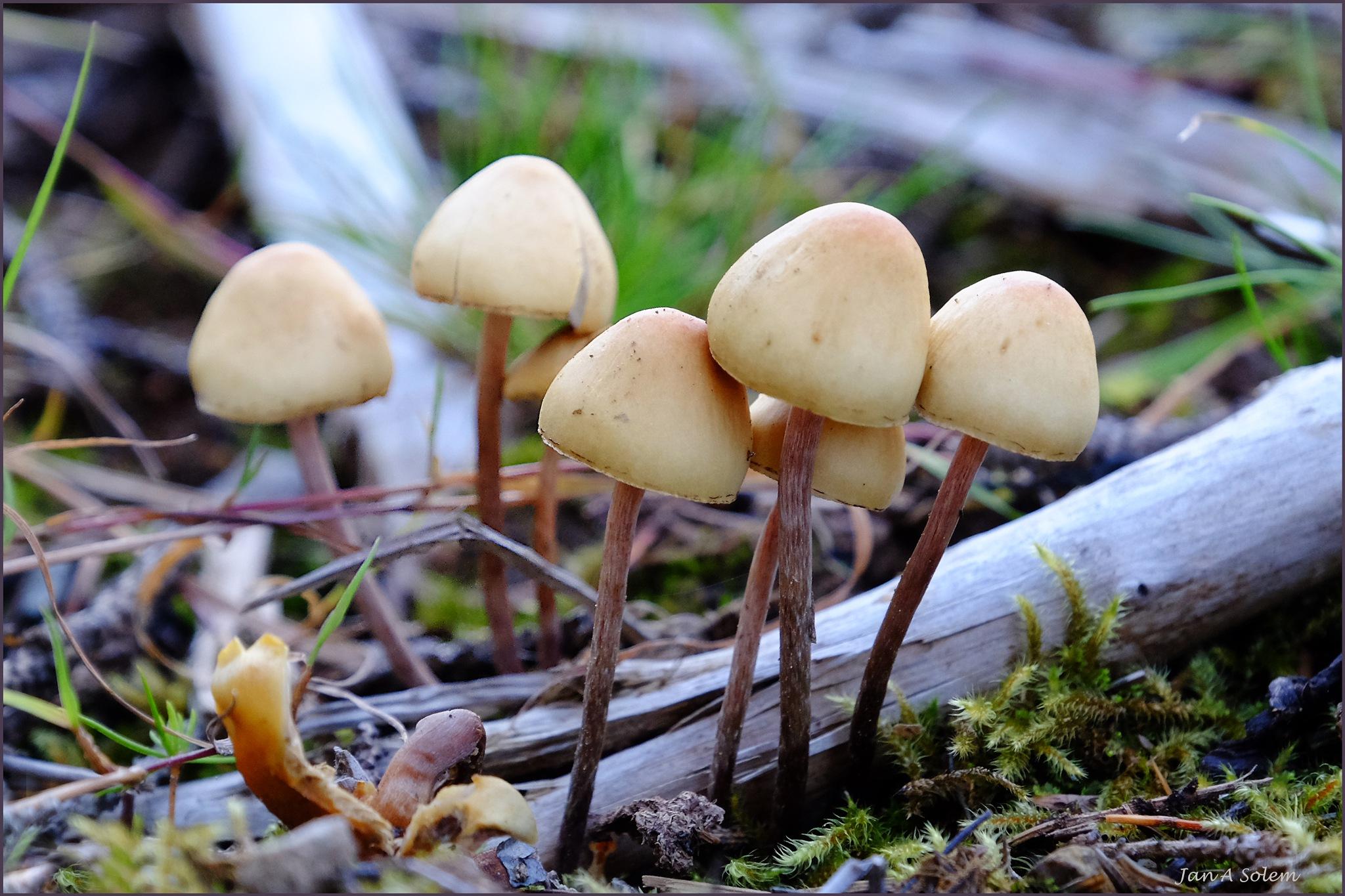 October Mushrooms by Jan Arvid Solem