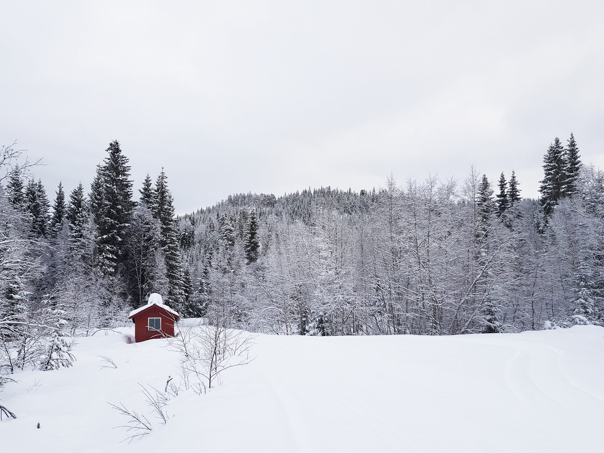 The small red cabin by Jan Arvid Solem