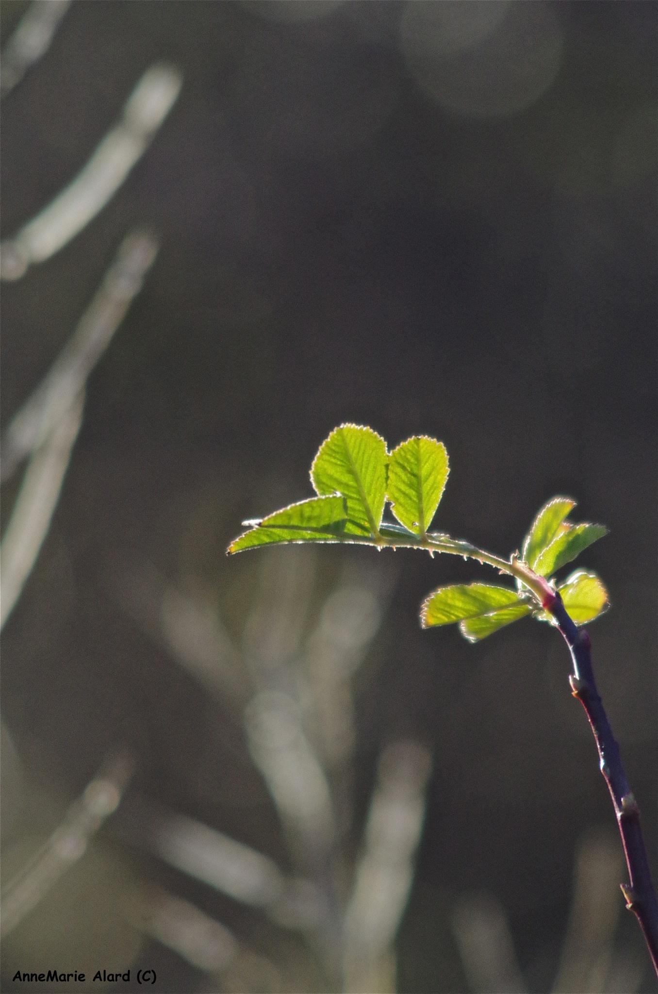 Green leave by annemariealard