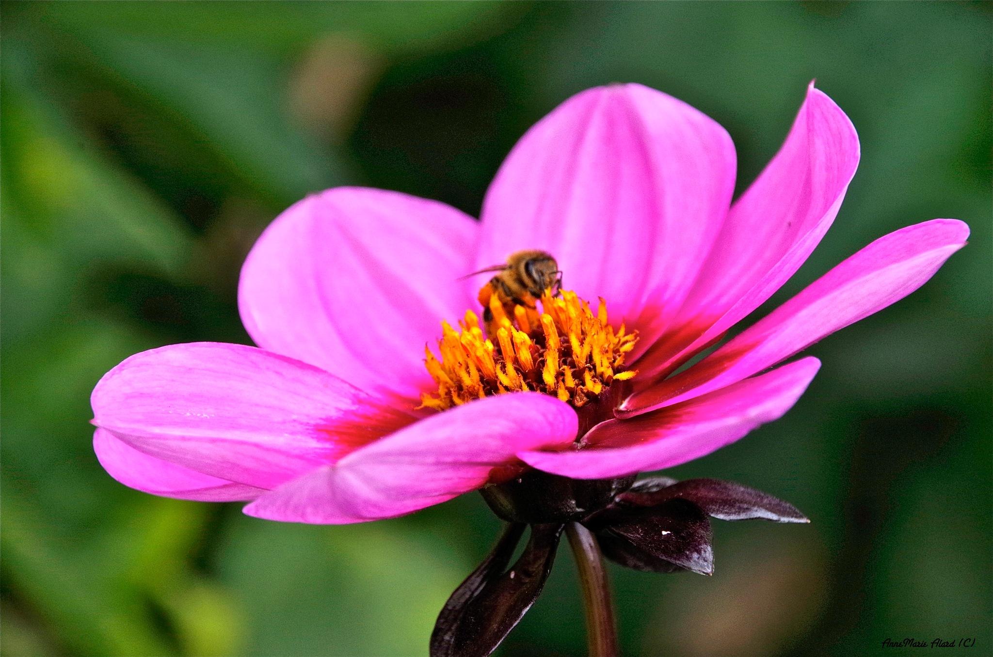 Bee my guest...... by annemariealard