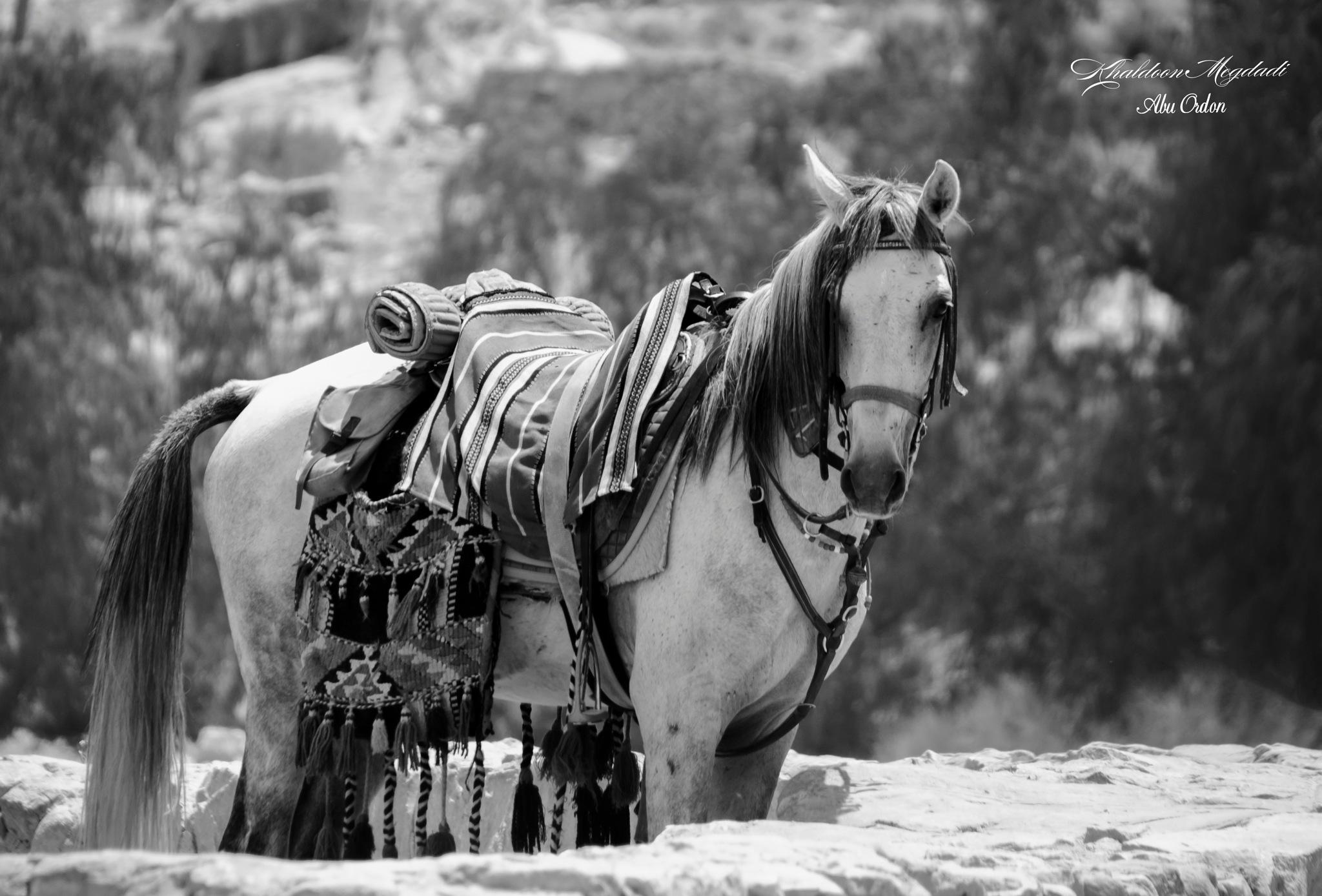 a horse by Abu Ordon