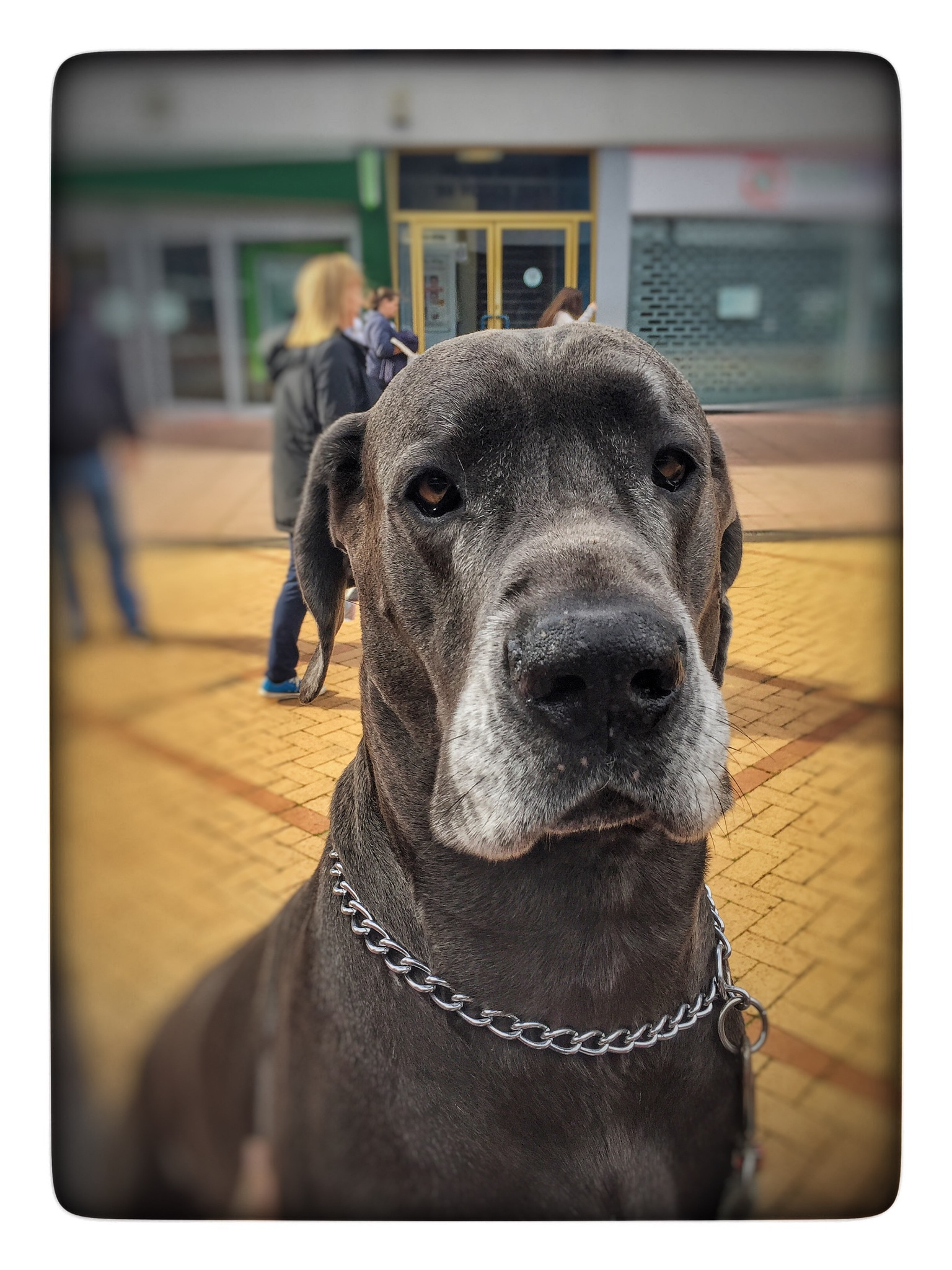 Spencer the Dane  by Andrew Menzies