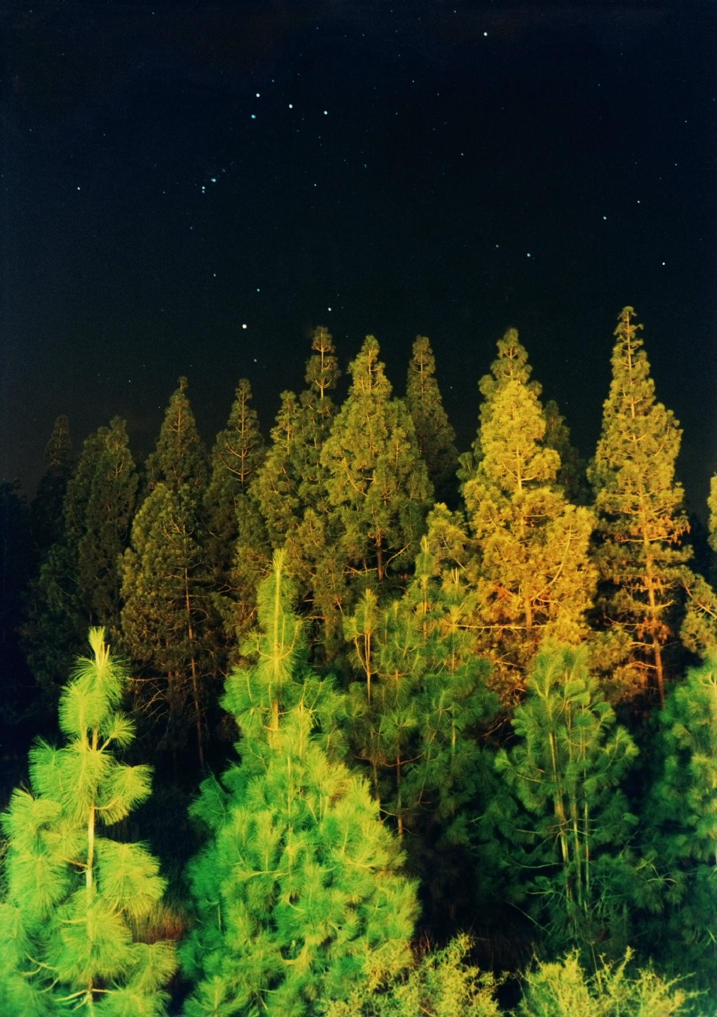 night wood by Konstantin Bolotinsky