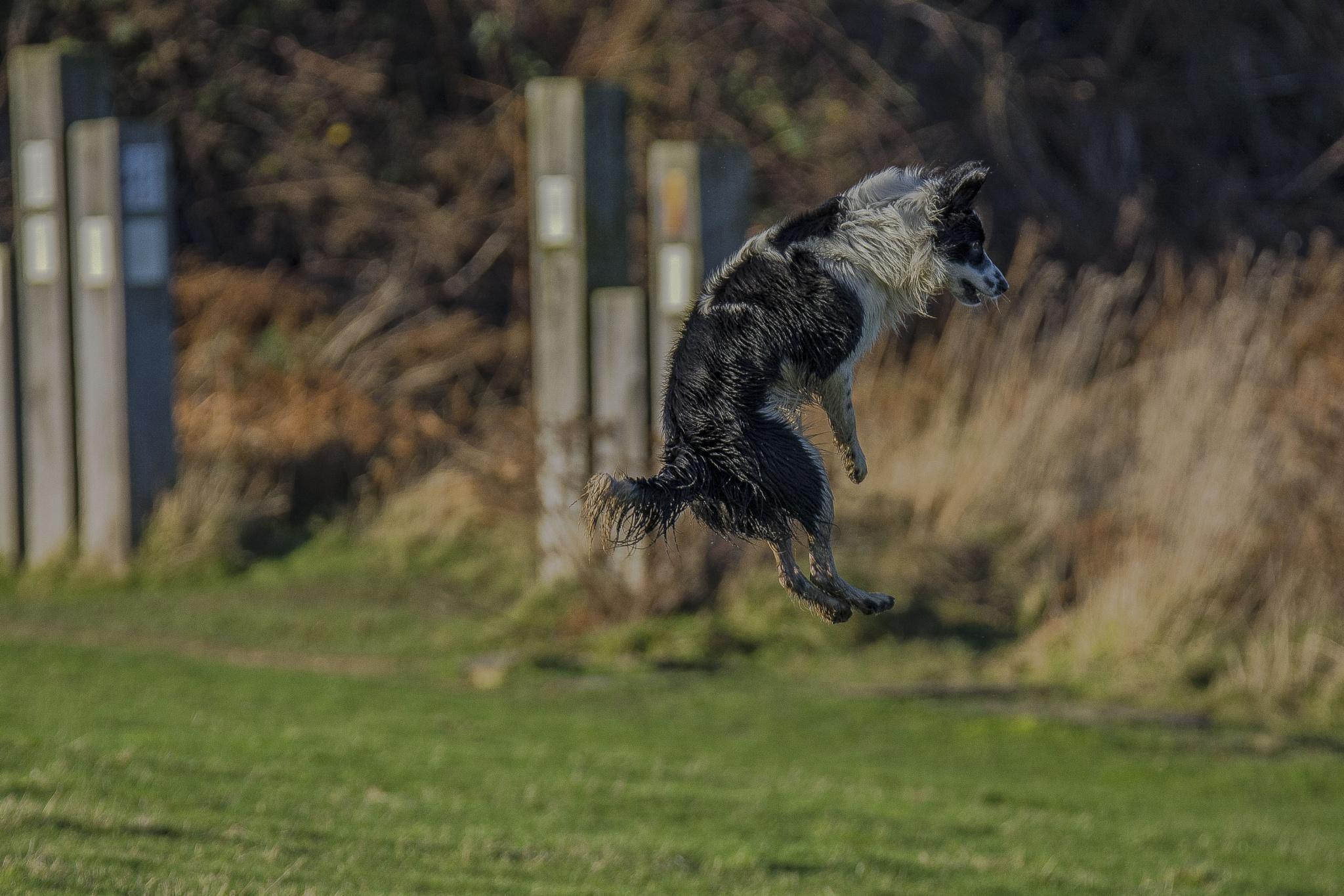I believe I can fly!  by Gordon MacPherson