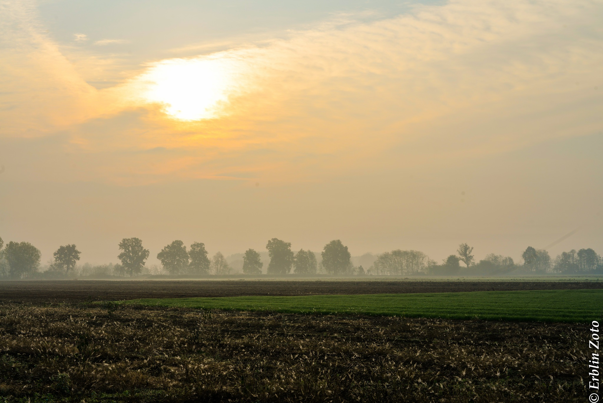 fog by Erblin Zoto