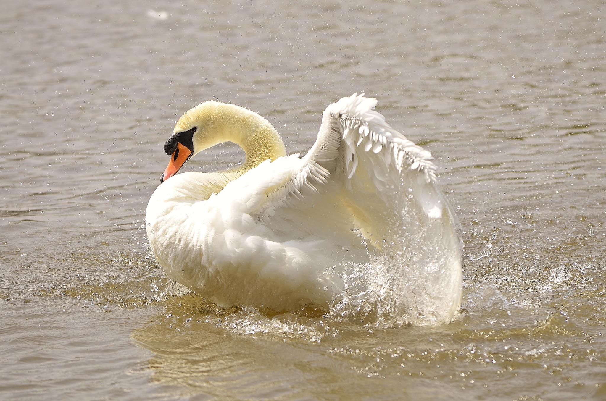 Swan Lake by melaniehartshorn40