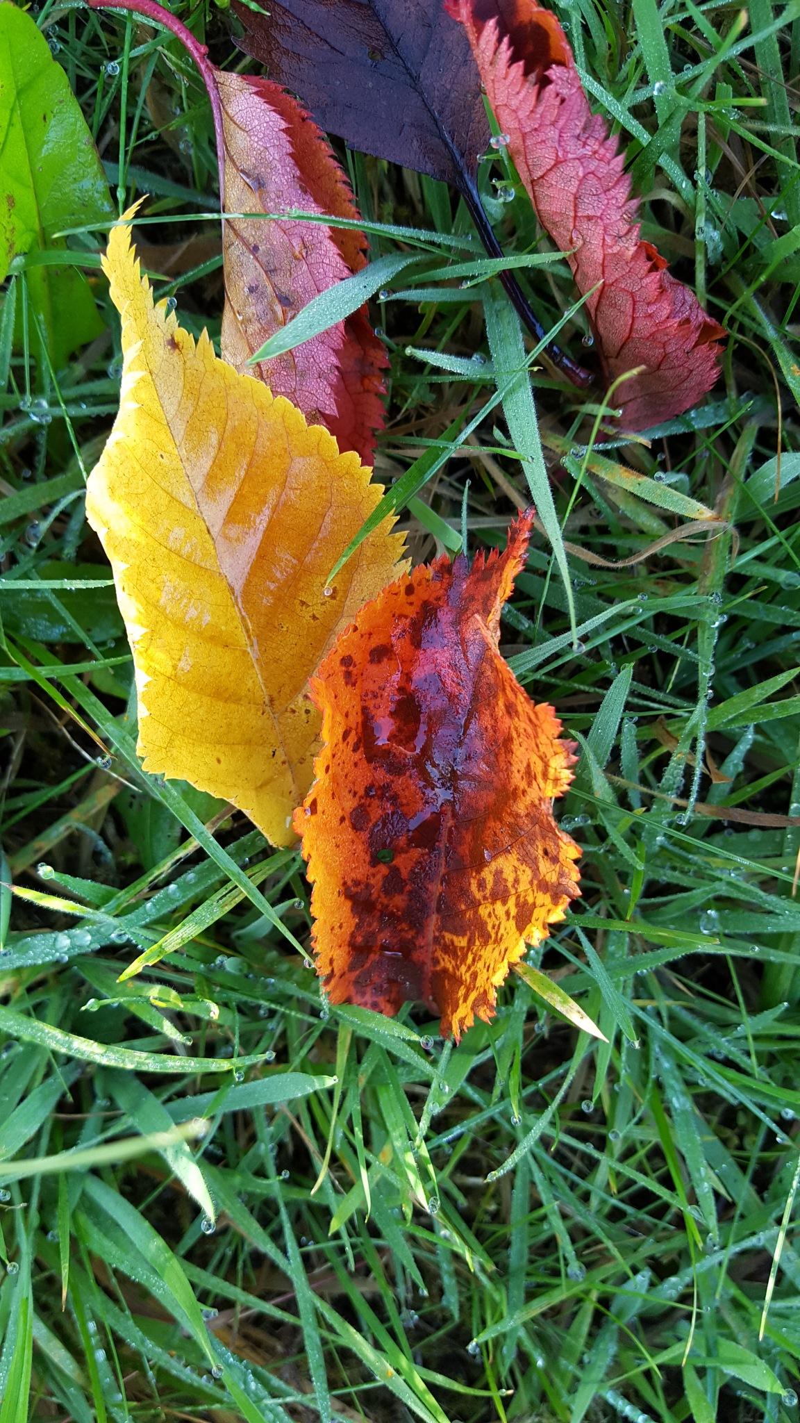 Autumn leaves by melaniehartshorn40